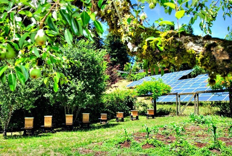 Bee hives and solar panels help Mother Nature at Applewood Inn in Sonoma Valley
