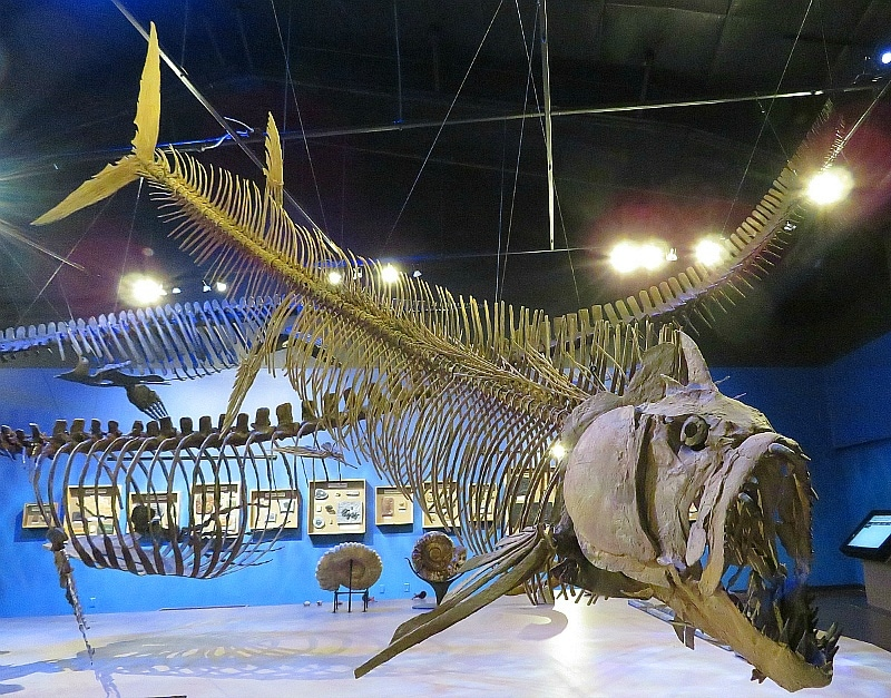 Royal Gorge Dinosaur Experience ~ 9 Amazing Adventures in Canon City and Colorado Spring for Families