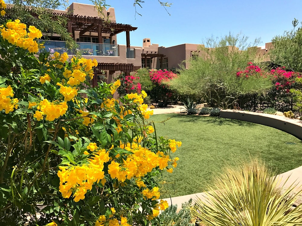 Beautiful grounds at Four Seasons Scottsdale with Kids