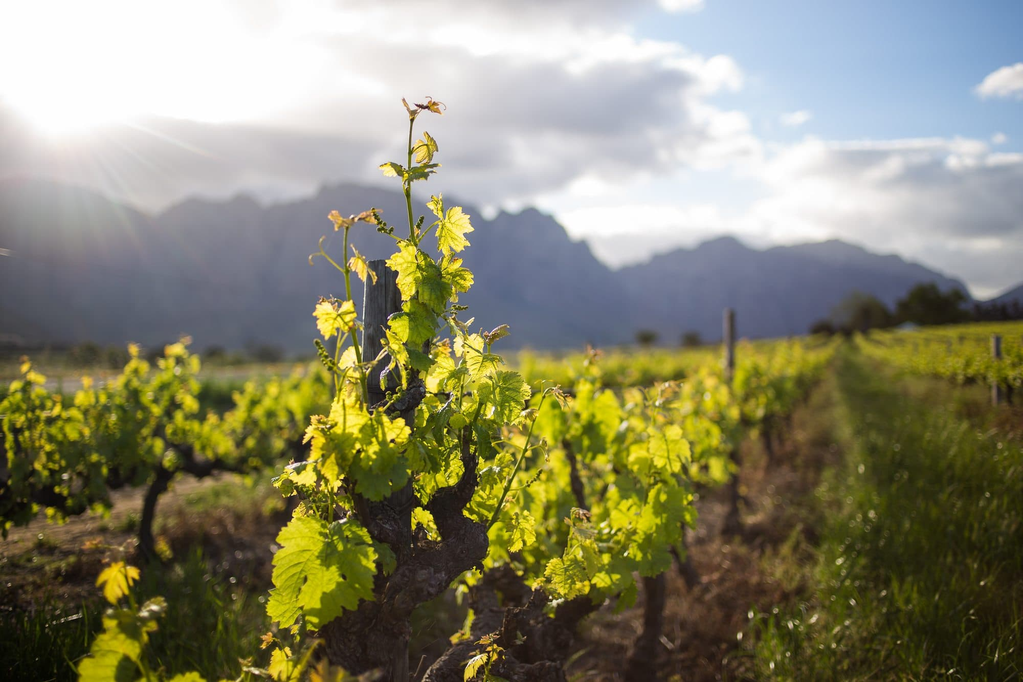 Wine tasting in South Africa? Bucket list worthy, for sure!