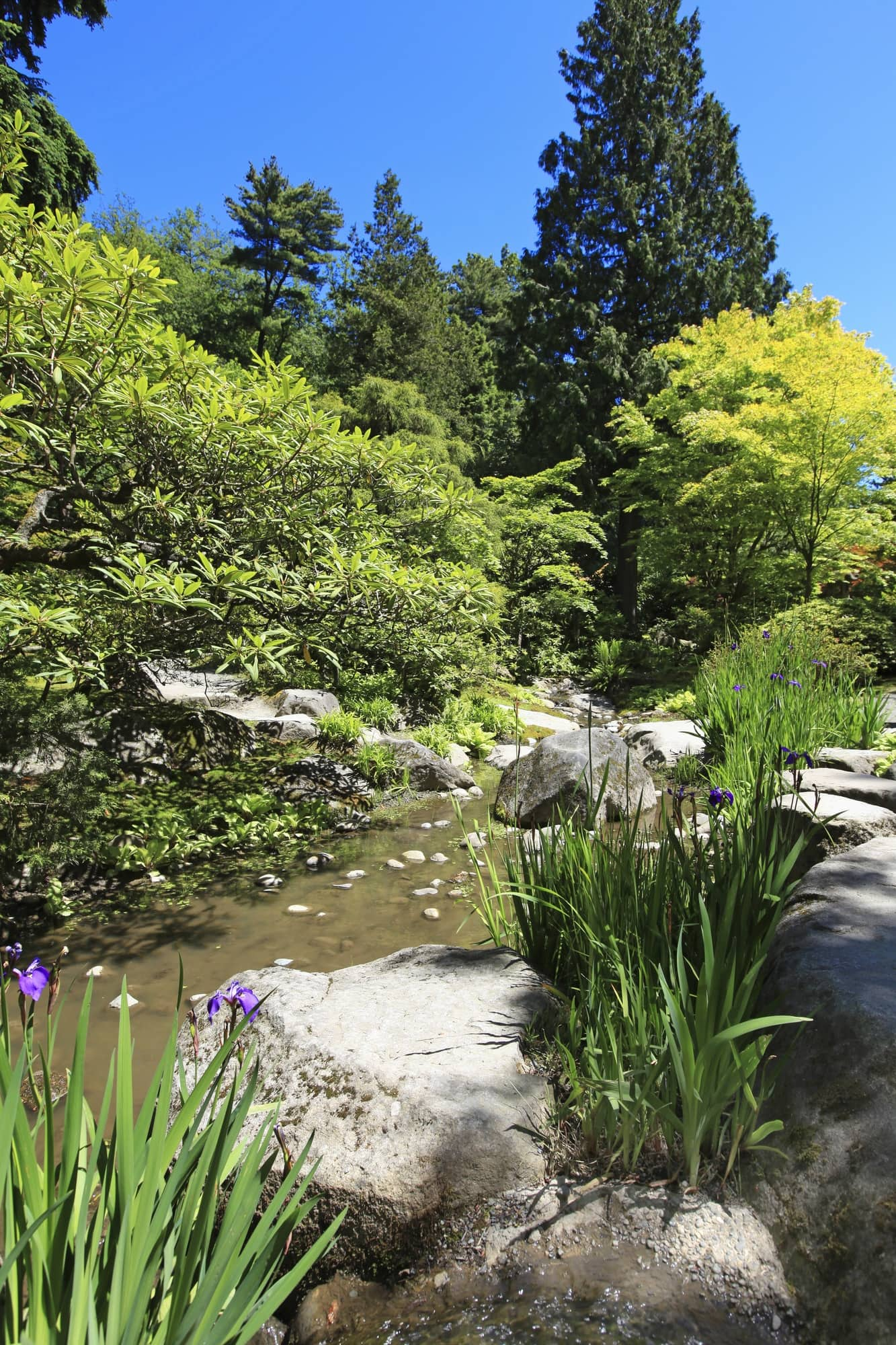 Japanese Garden in Seattle ~ Seattle with Kids