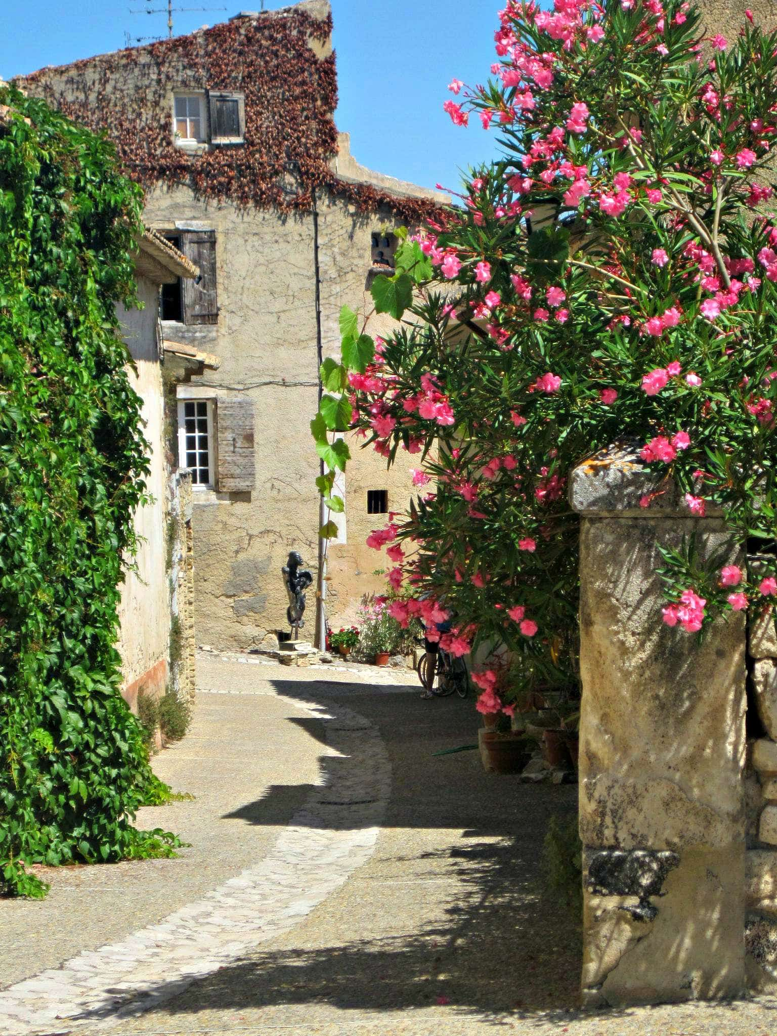 A summer afternoon in Provence with kids