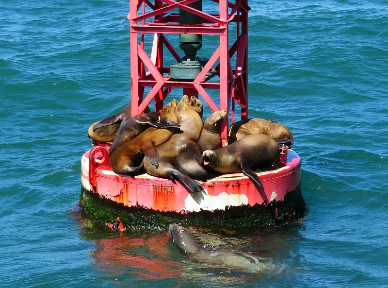 Sea lions galore spotted on the way to the Channel Islands ~ 7 unique things to do in Ventura County California with kids