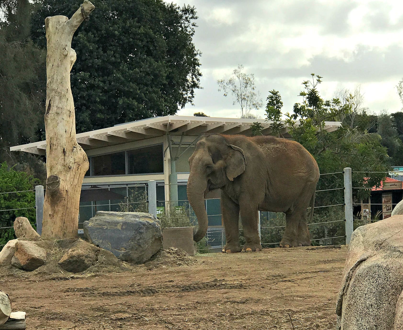 Elephant Odyssey at the San Diego Zoo with kids