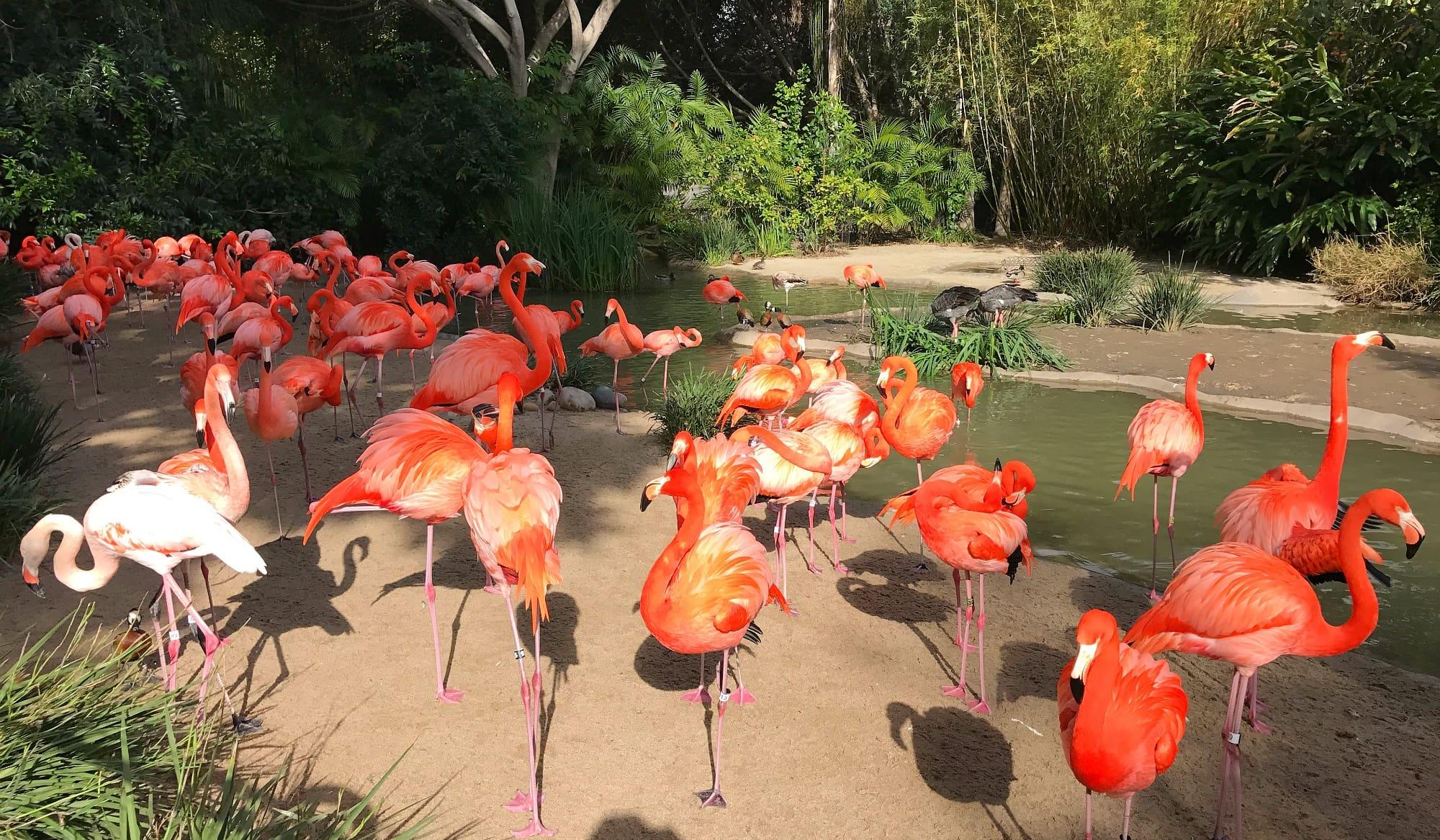 Kids love the flamingo exhibit near San Diego Zoo's entrance