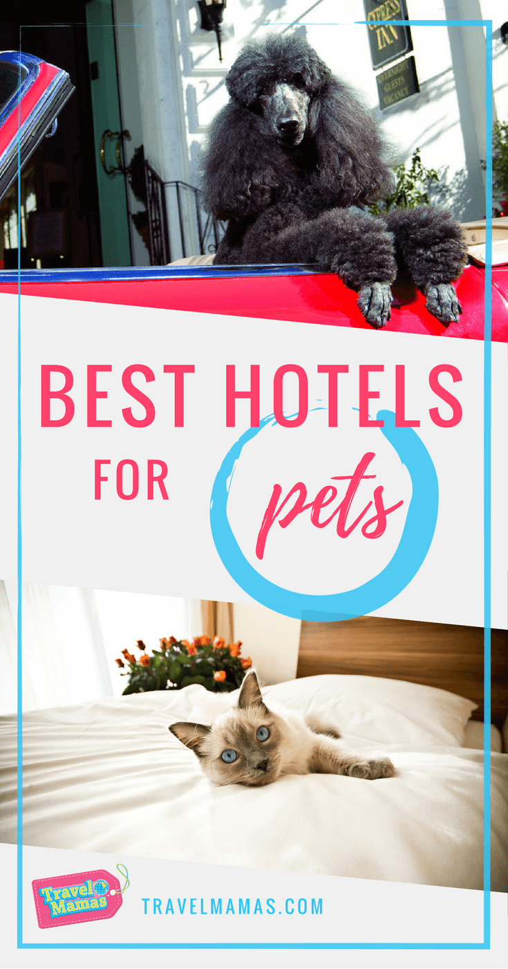 Best Hotels for Pets for All Sorts of Vacation Styles