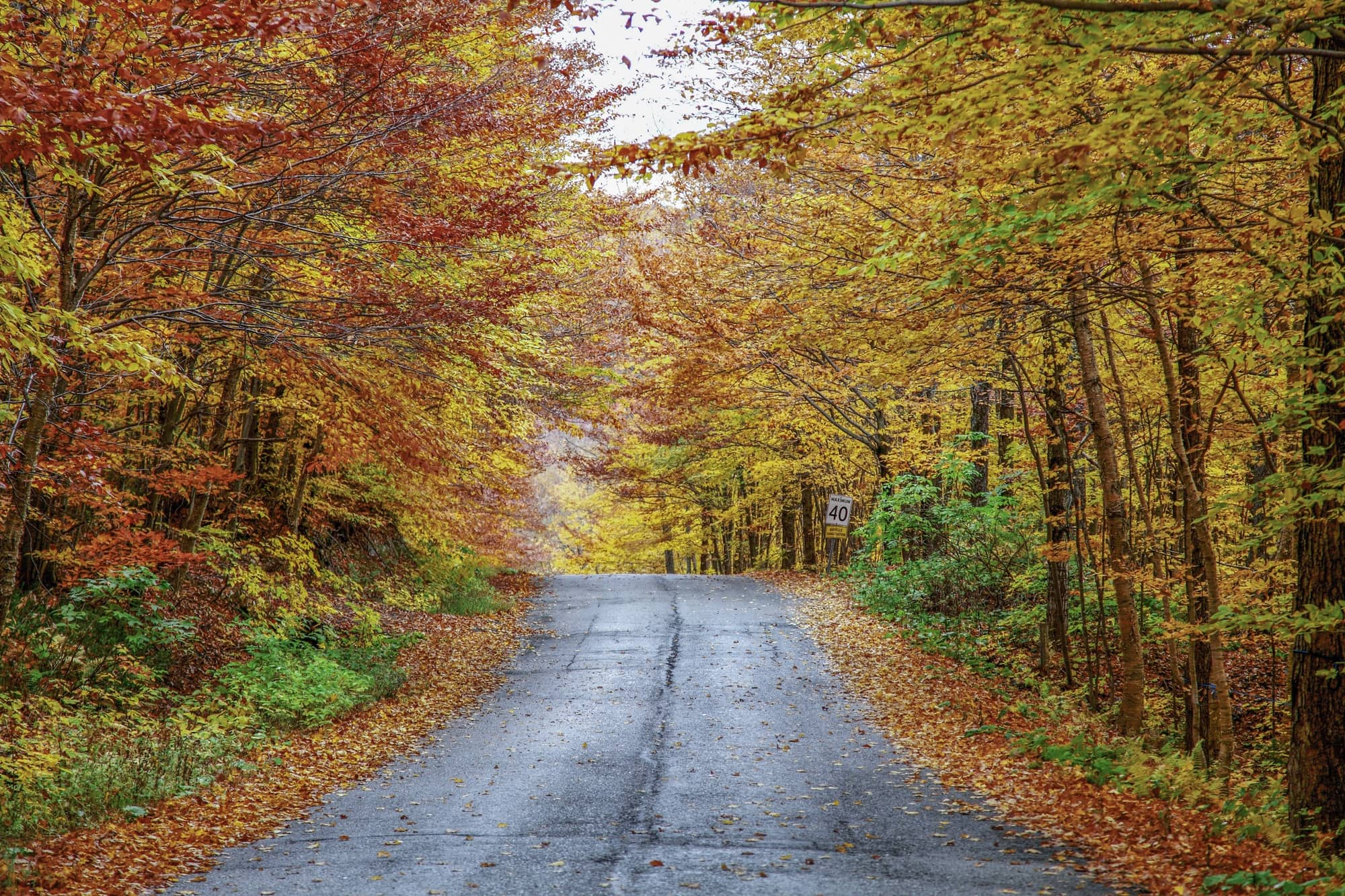 Fall foliage in Quebec ~ 25 Places in Canada Every Family Should Visit
