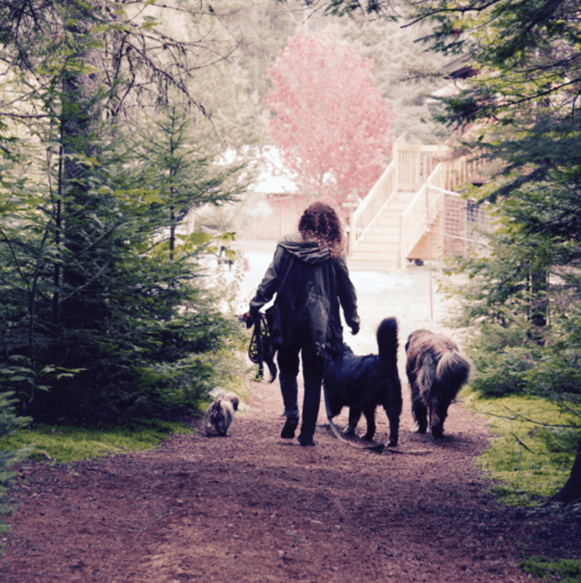Pets enjoy bed & biscuits and long walks at the Domaine Summum B&B ~ Best Hotels for Pets