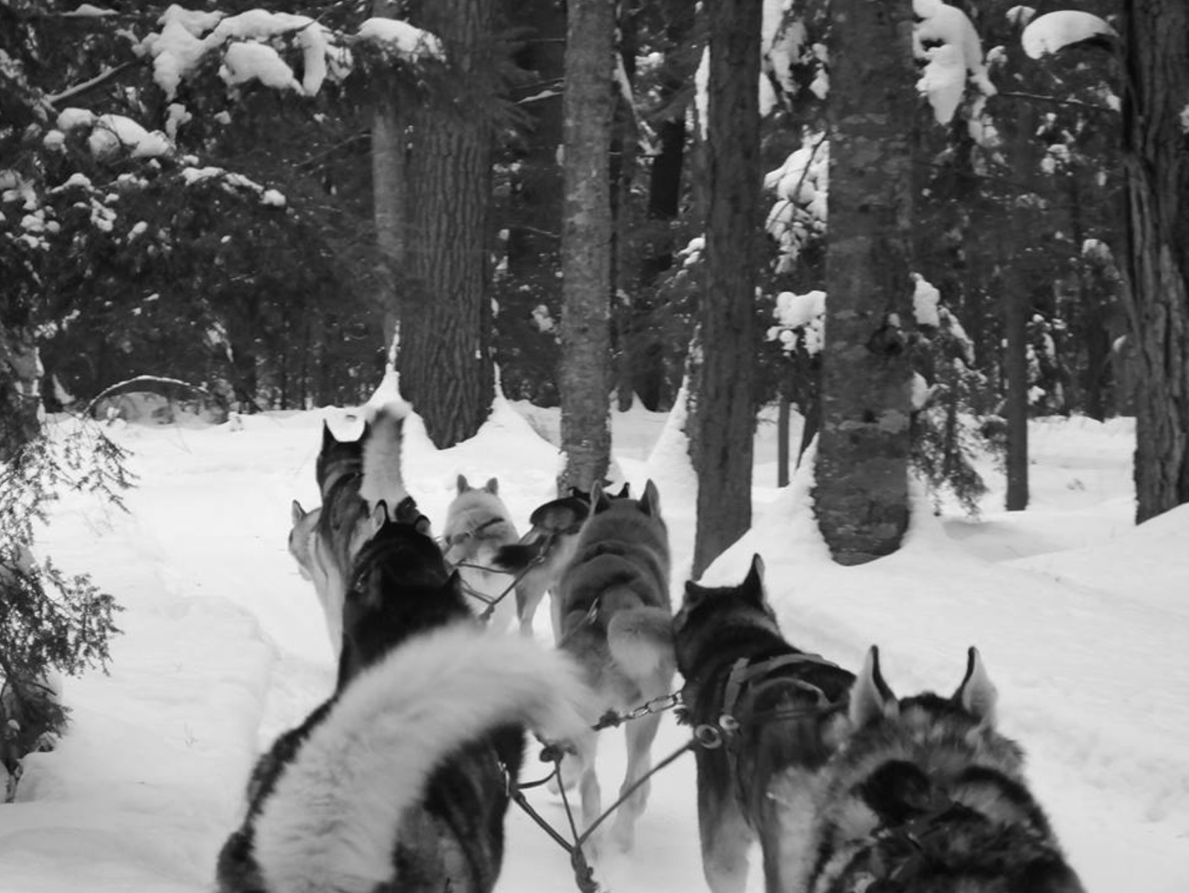 Dog-sledding through a forest in Quebec's Outaouais