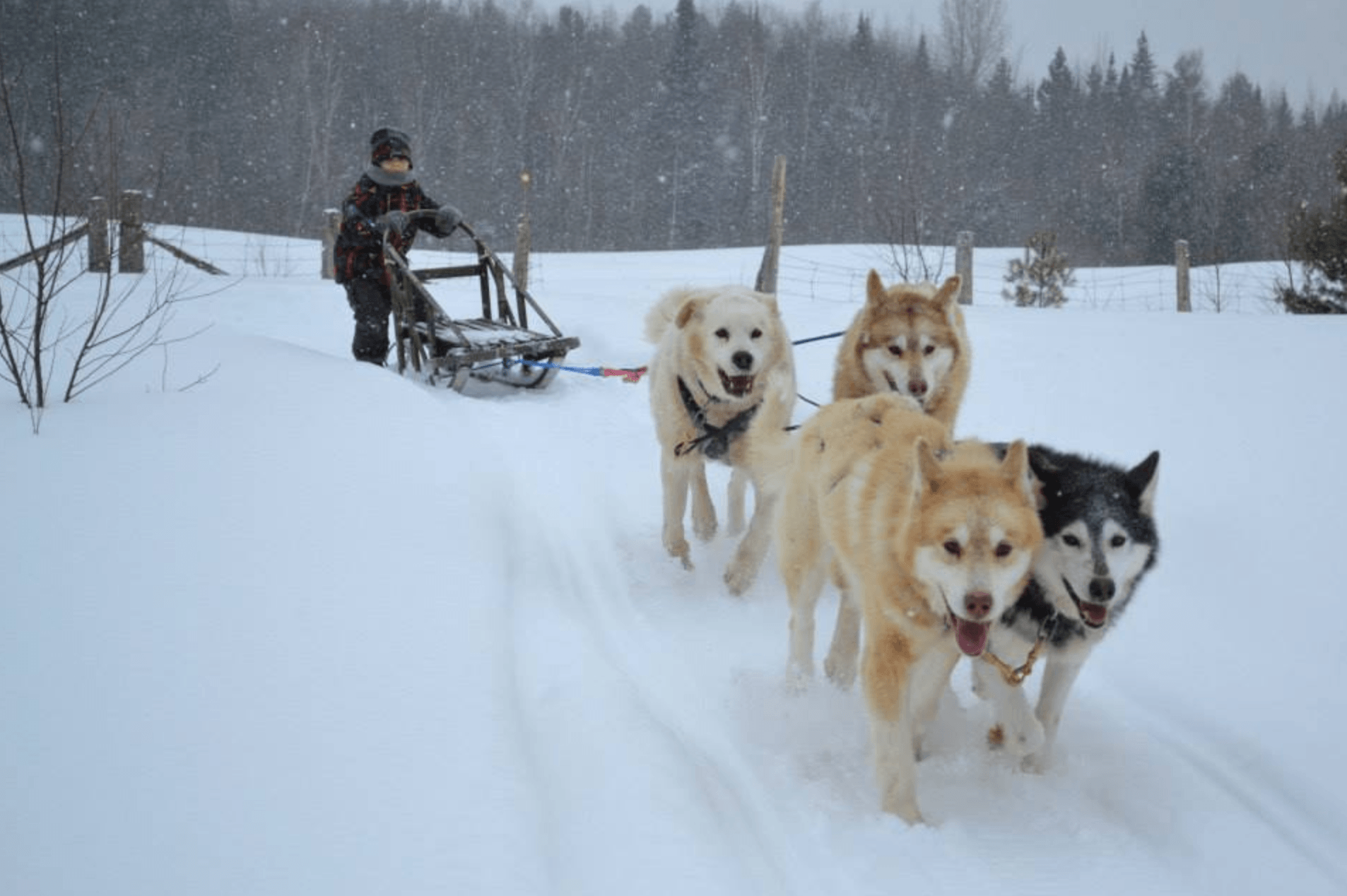 Children as young as 12 can drive their own dog-sledding team at Chiens-Traineaux Petite-Nation