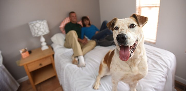 Volunteering with pets is the focus of a stay at Best Friends Animal Sanctuary Cottages and Cabins ~ Best Hotels for Pets