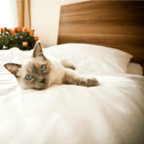 Best Hotels for Pets in North America