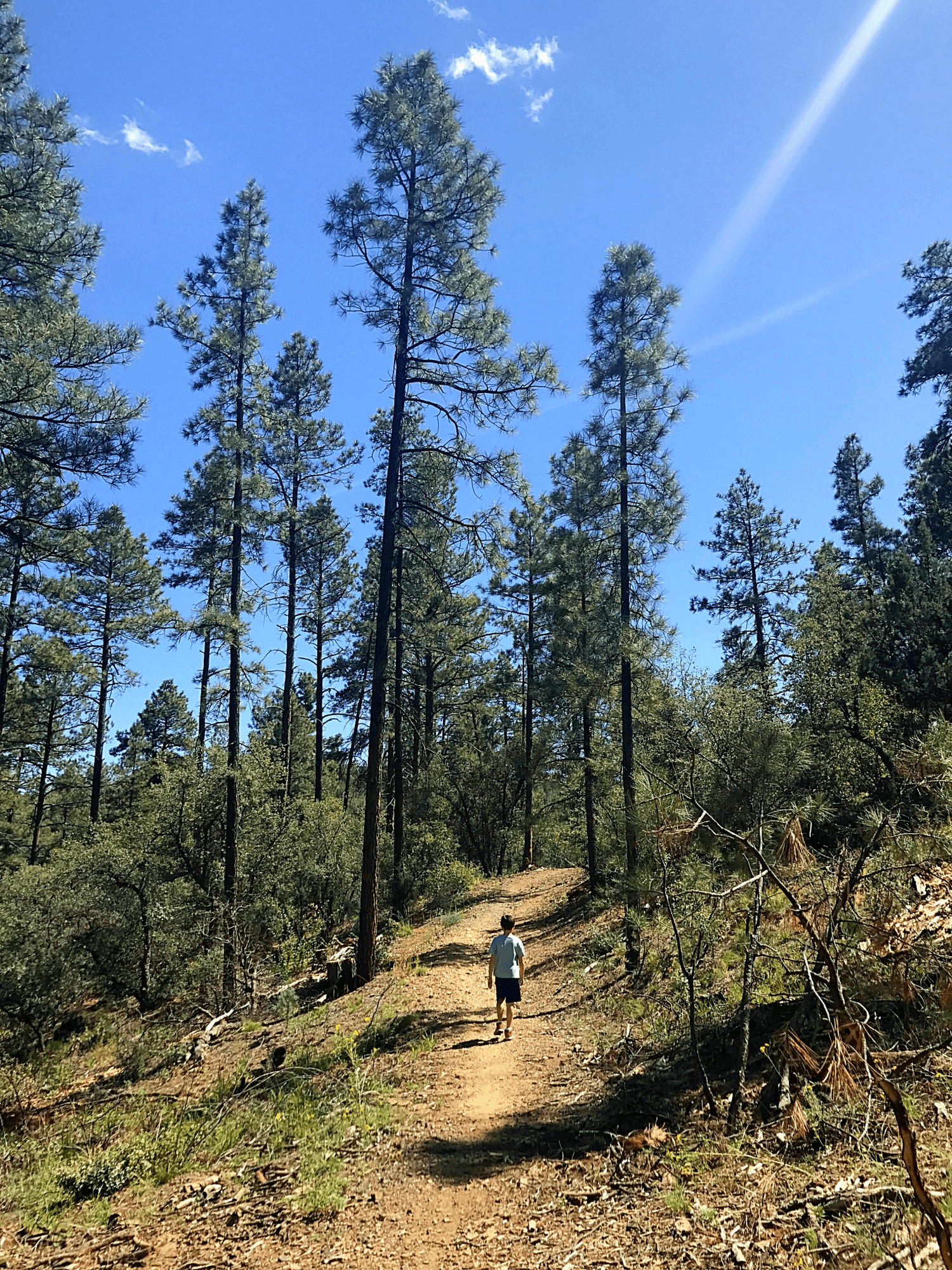 Hiking Highlands Center's trails with my son was a highlight of our trip to Prescott with kids