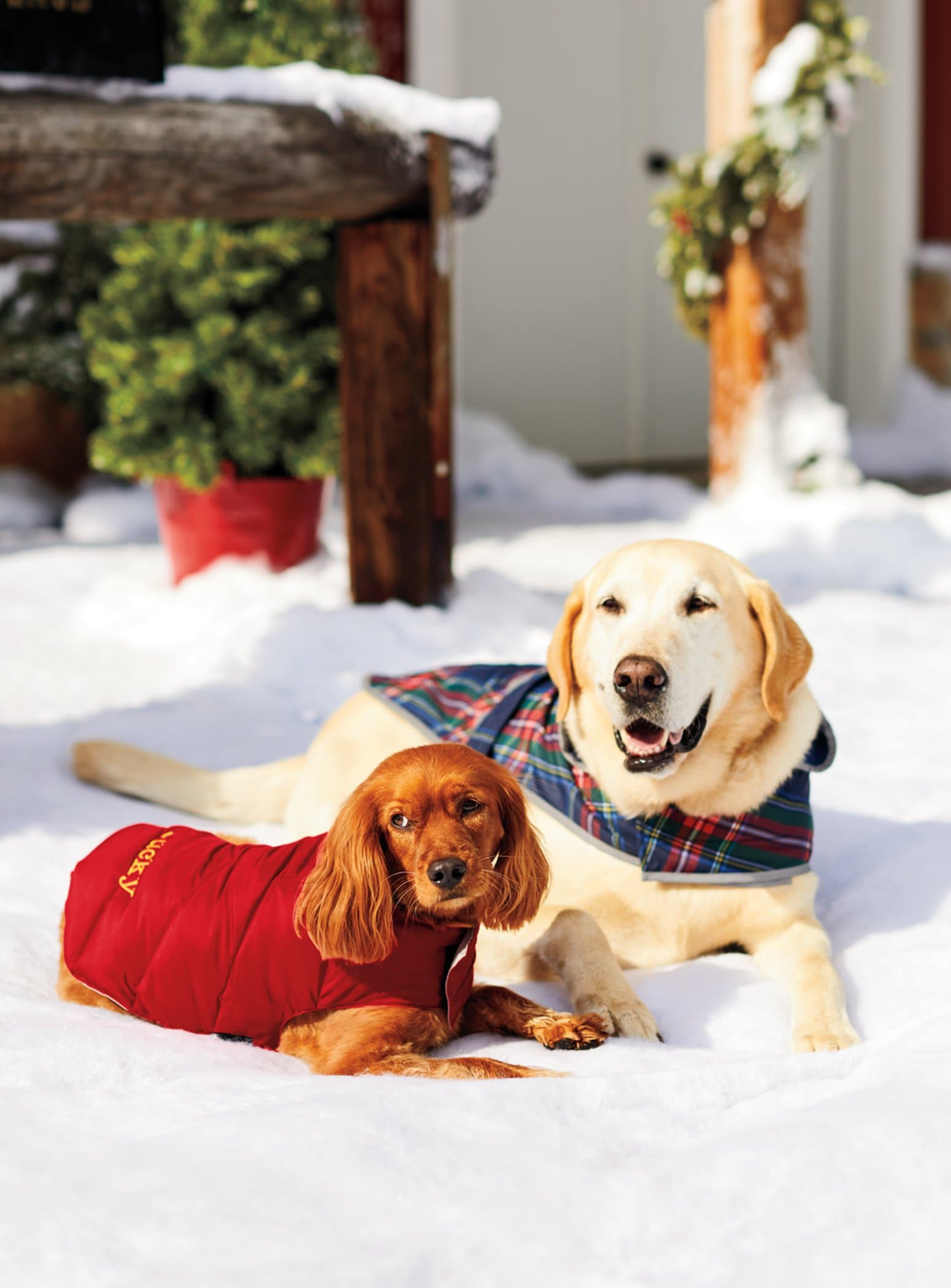 Furry family members deserve holiday gifts, too! Santa for a Day Lands' End Discounts and Giveaways