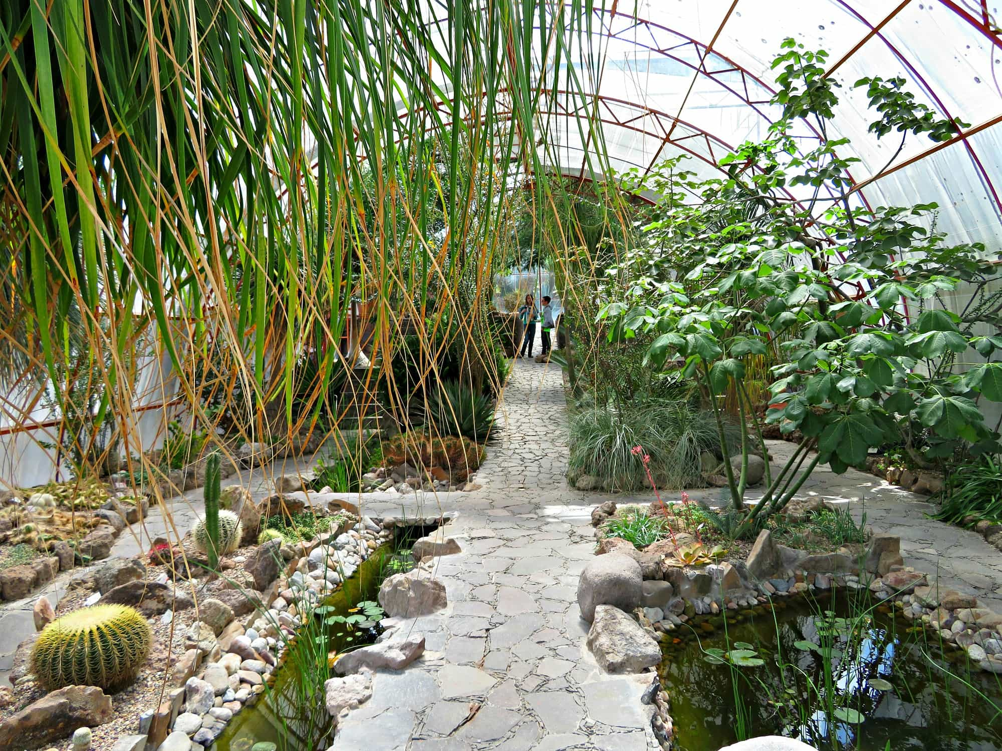 Inside a greenhouse at El Charco del Ingenio in San Miguel de Allende with kids