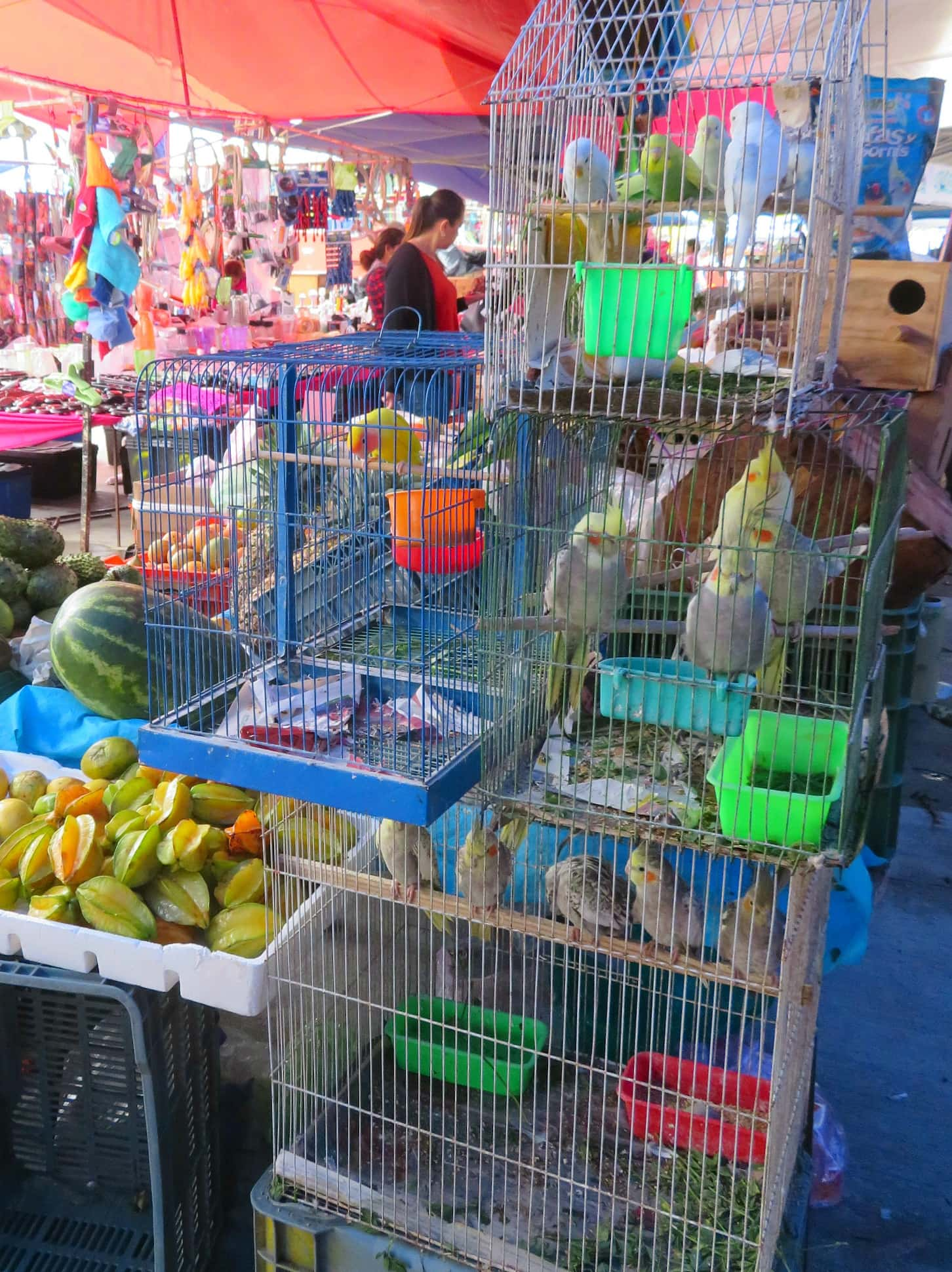 Pet birds for sale at Tianguis de Los Martes in San Miguel de Allende with kids
