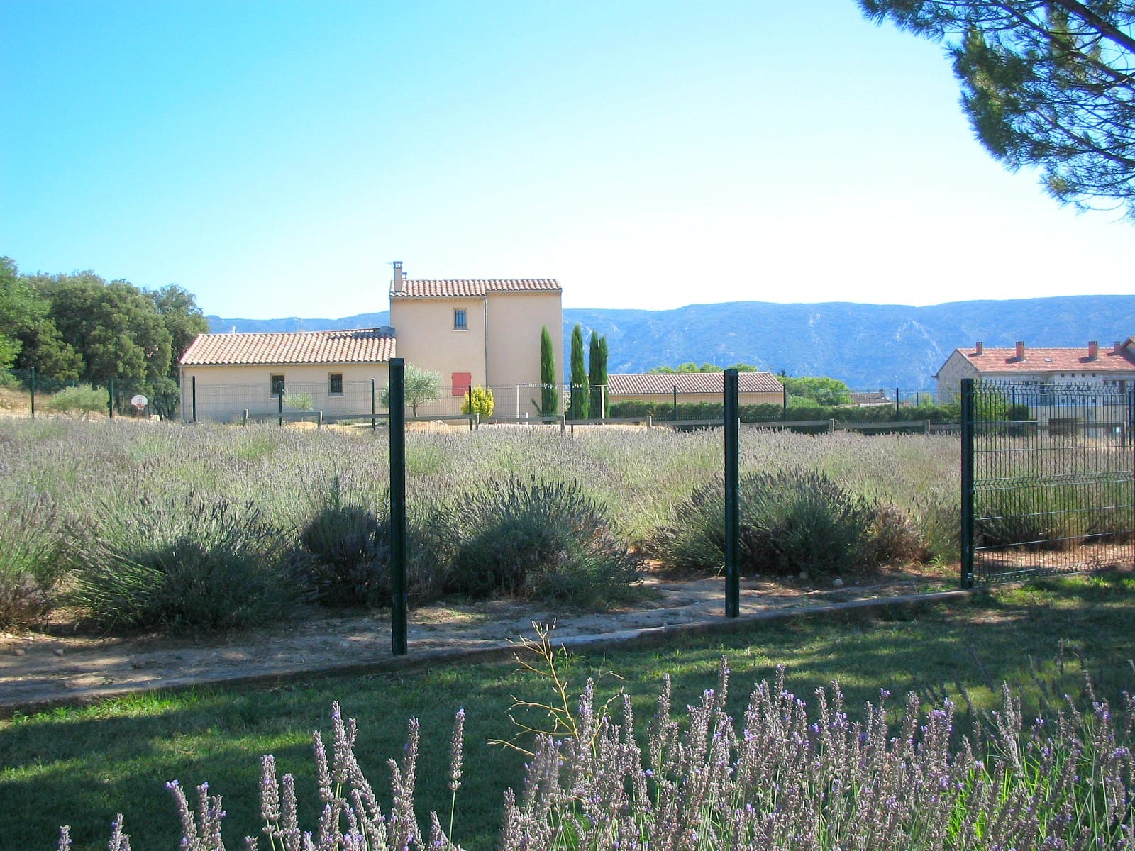 Museum of Lavender in the town of Coustellet in Luberon ~ Best destinations in France for families