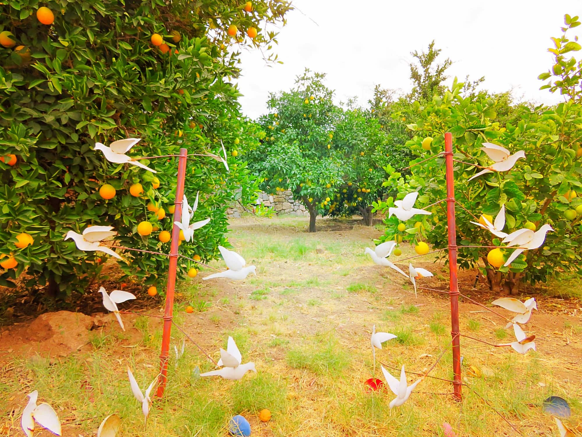 A dove art installation among citrus trees at Aravaipa Farms Inn