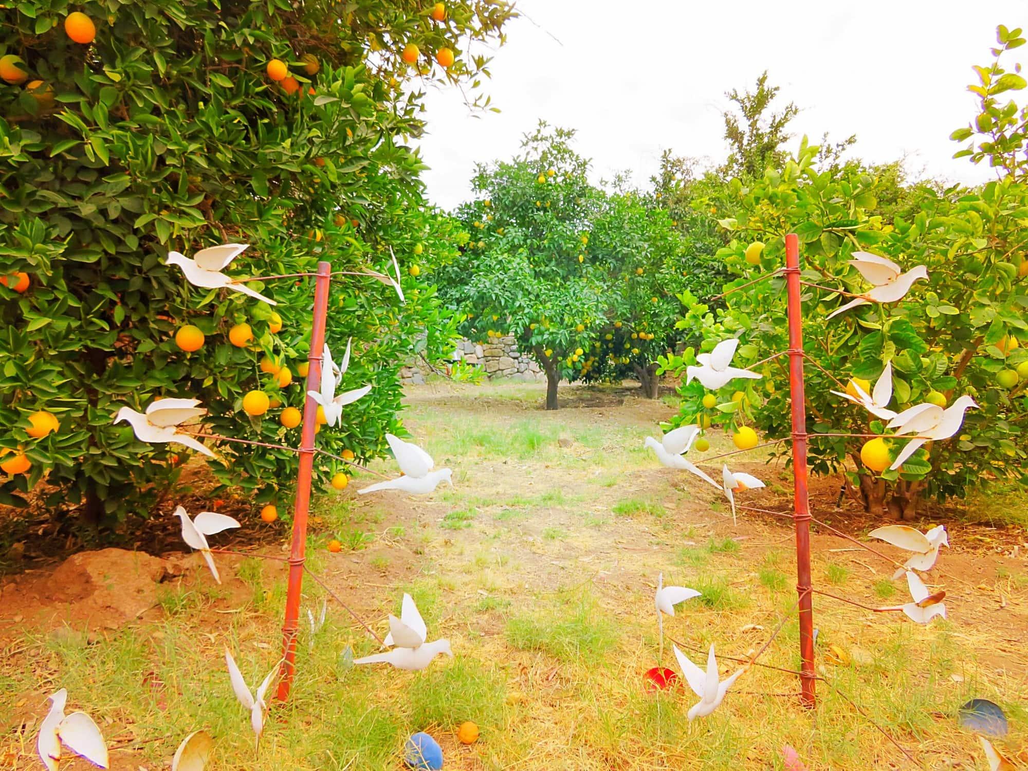 A dove art installation among citrus trees at Aravaipa Farms Inn