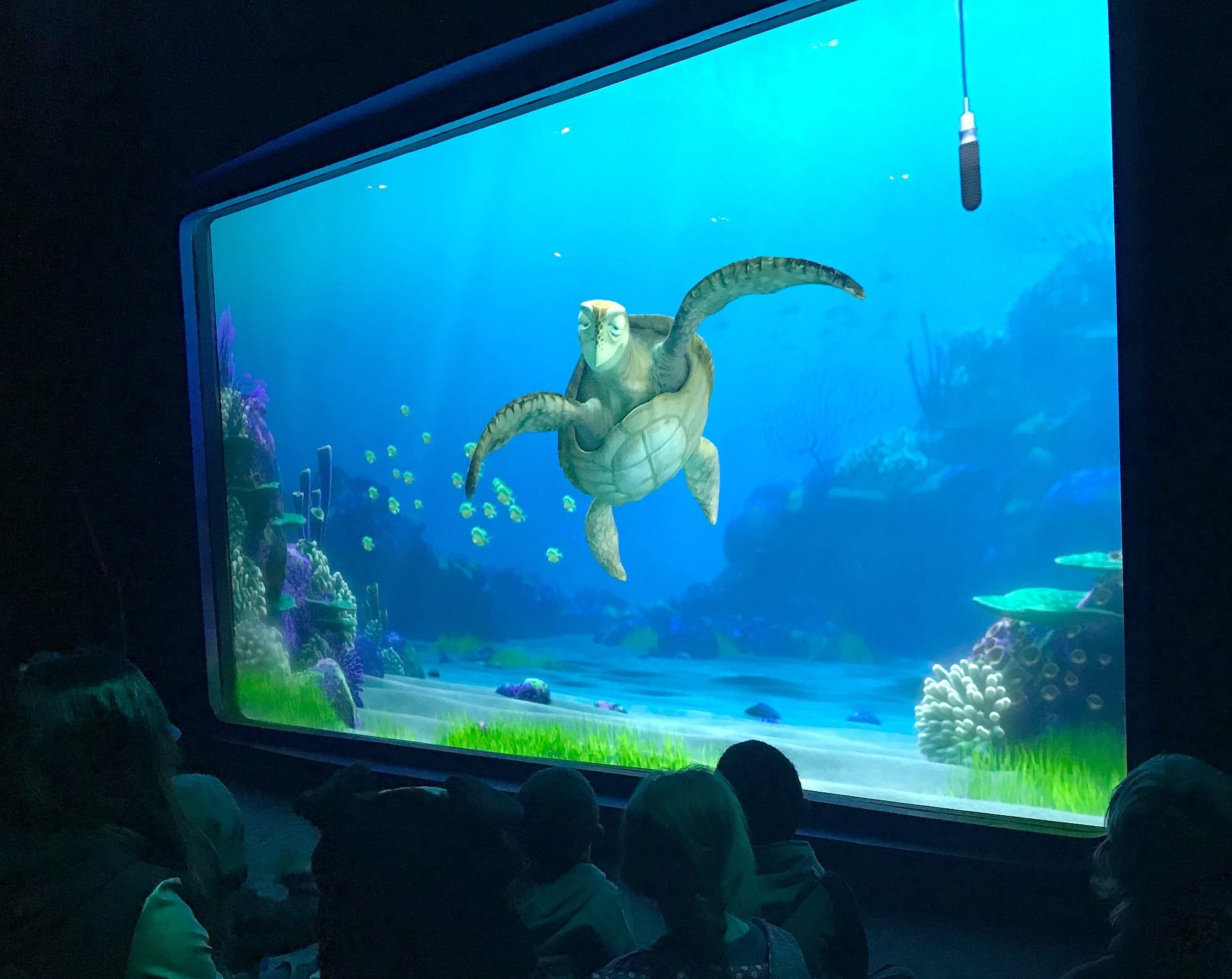 Kids learn about sea turtles and the ocean at Turtle Talk with Crush ~ Educational Things to Do at Disneyland with Kids
