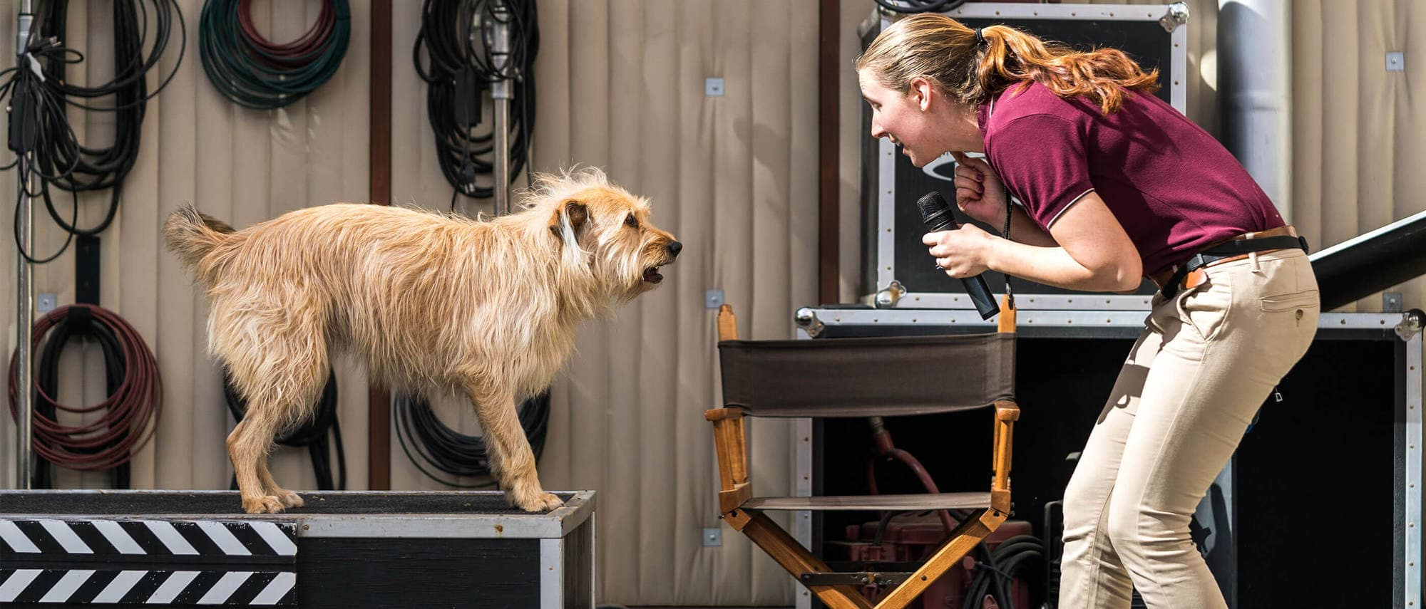 Kids of all ages will enjoy Universal's Animal Actors show