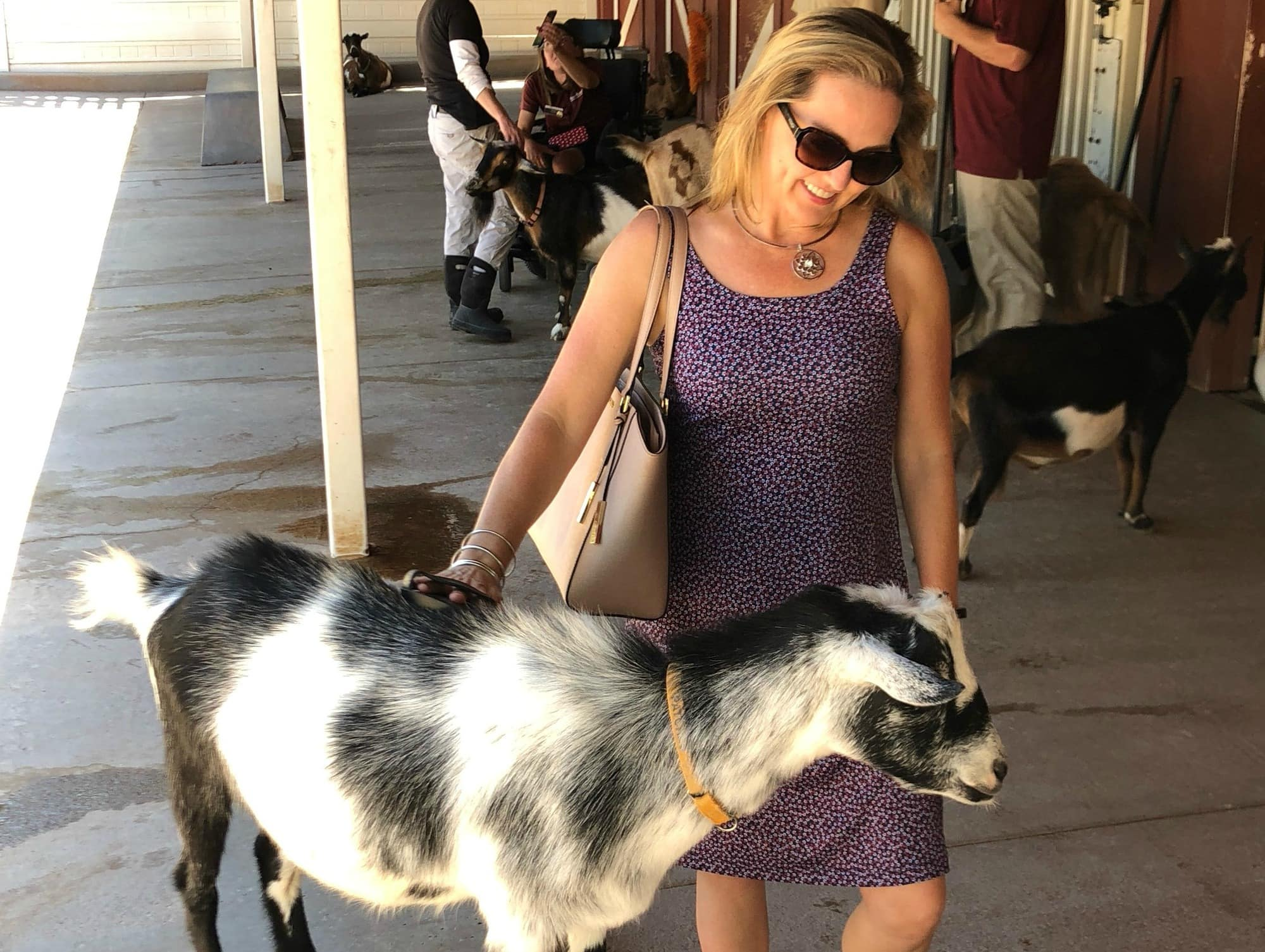 Keeping comfy and cool in my Columbia PFG Freezer III dress in the petting zoo