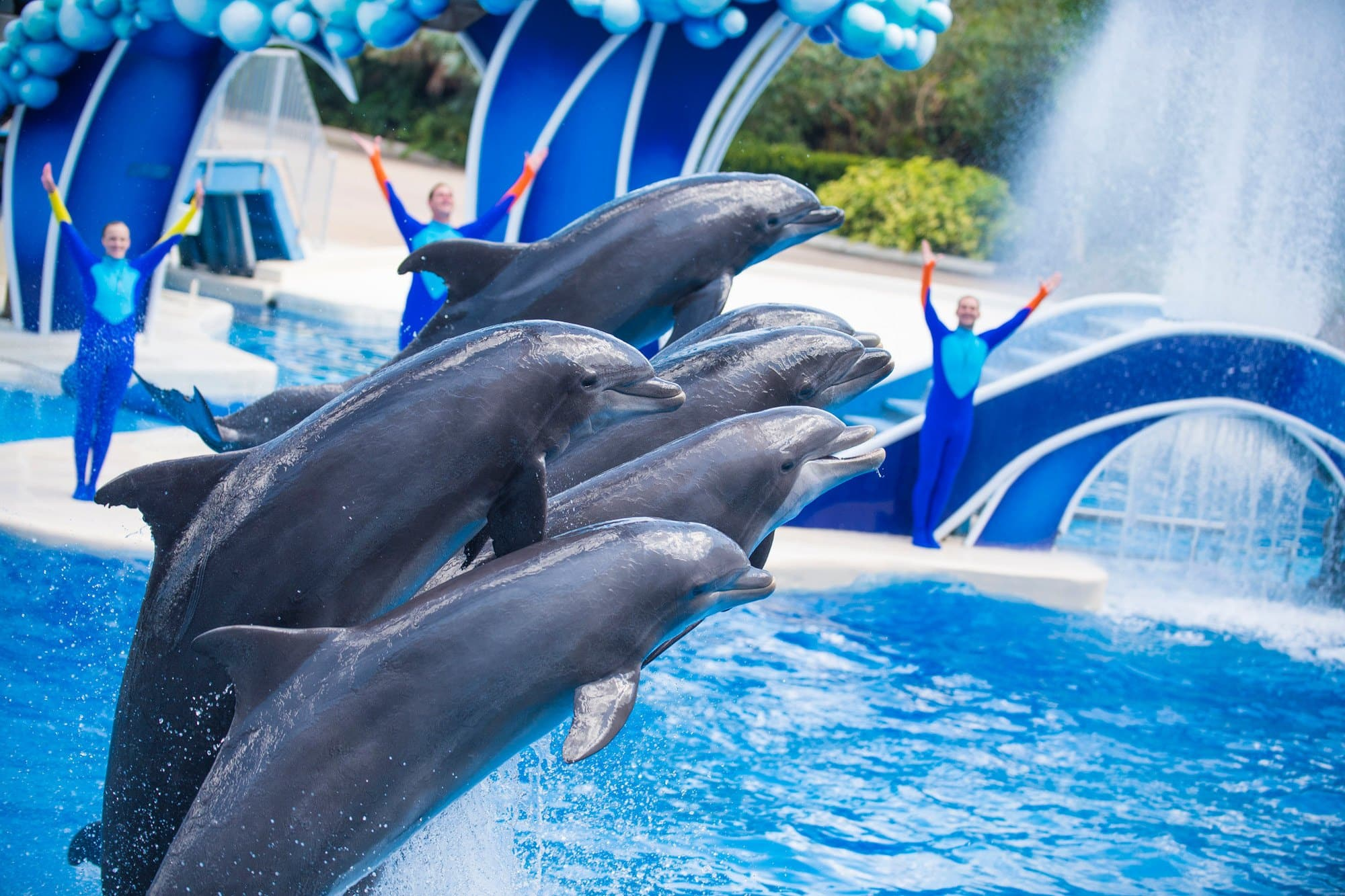 Unless there's lightning or thunder, the show will go on at SeaWorld Orlando, even in the rain
