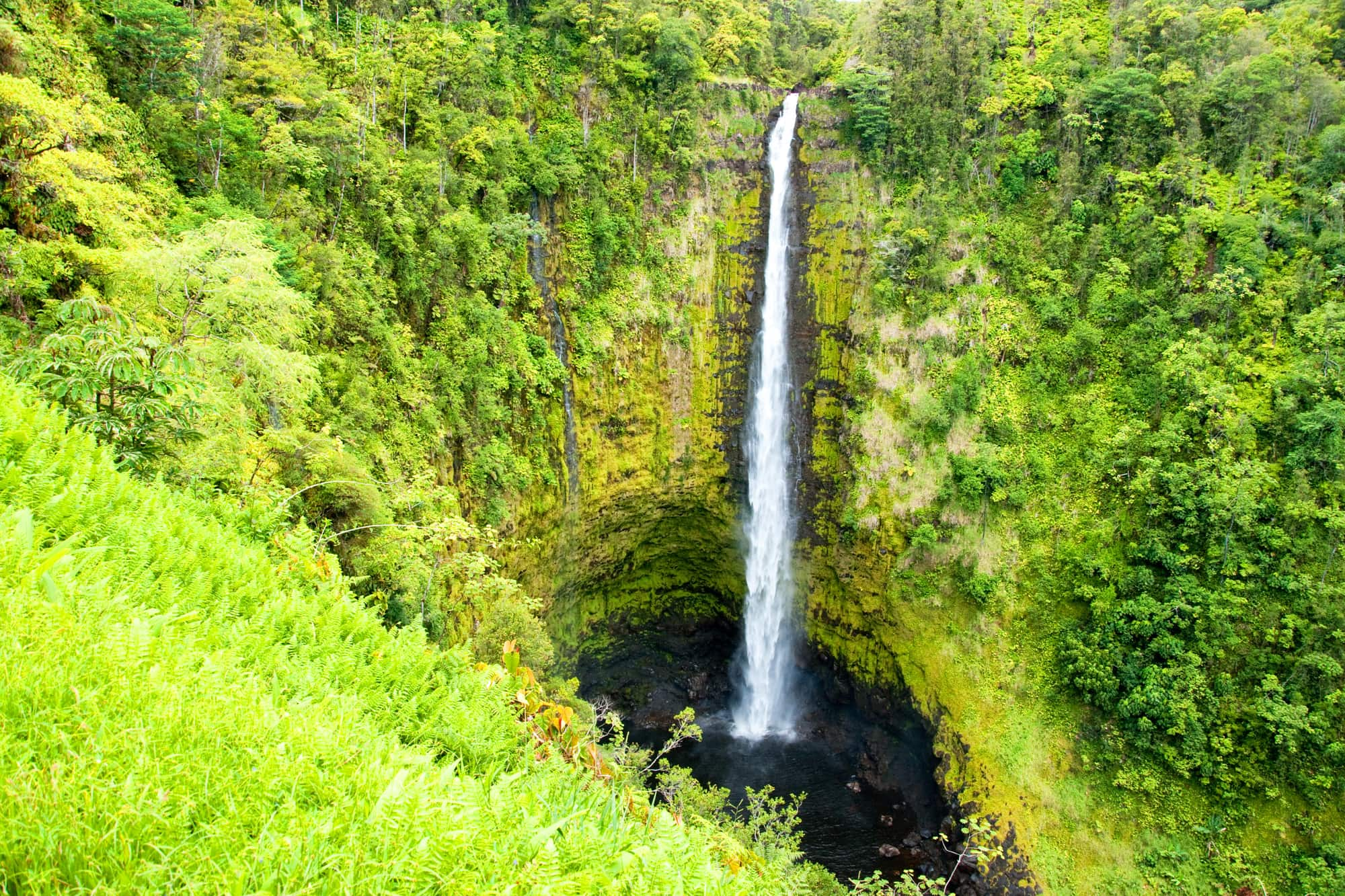 Akaka Falls near Hilo on the Big Island
