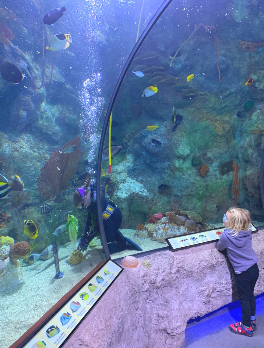 Kids love getting up close to fish...and aquarium staff at the ABQ BioPark