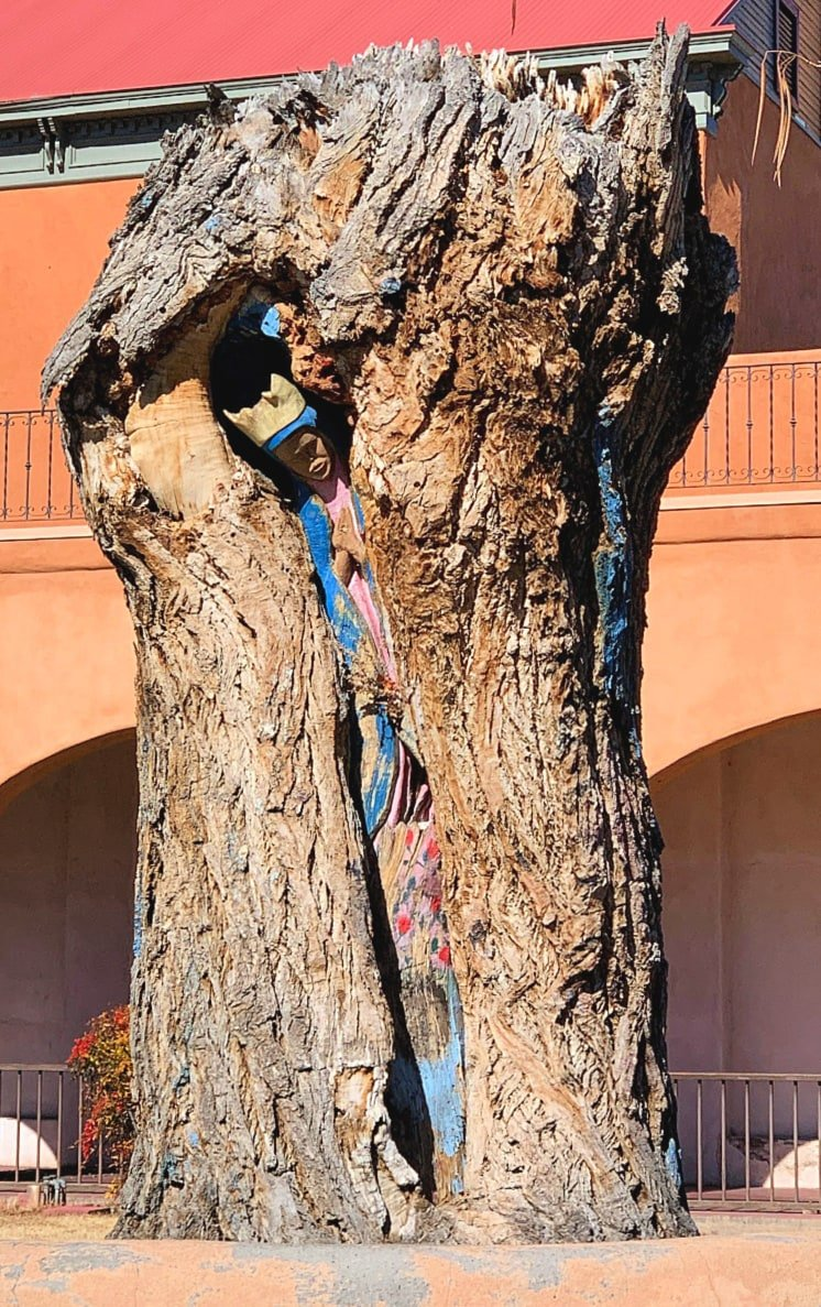 Look for La Virgen de Guadalupe Tree in Old Town Albuquerque