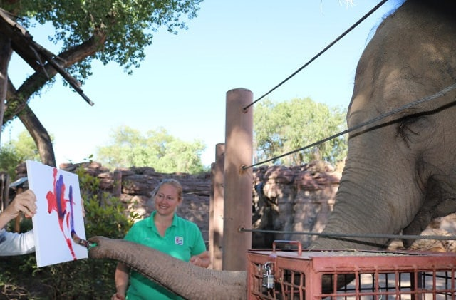 Rosie the elephant painting a picture at the ABQ BioPark Zoo
