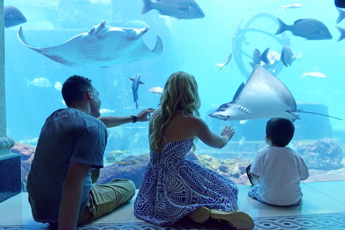 Connect with undersea creatures in The Dig at Atlantis Bahamas with children