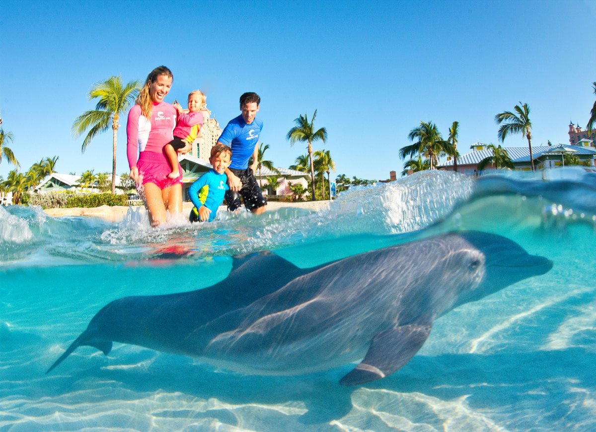Interact with dolphins and other marine animals at Dolphin Cay at Atlantis Bahamas with kids