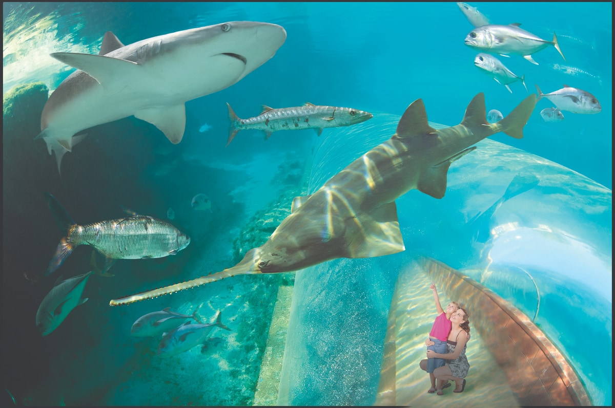 Families are amazed by the aquariums and open air marine habitats at Atlantis Bahamas