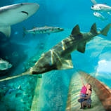 Atlantis with Kids from Babies to Teens - Predatory Tunnel