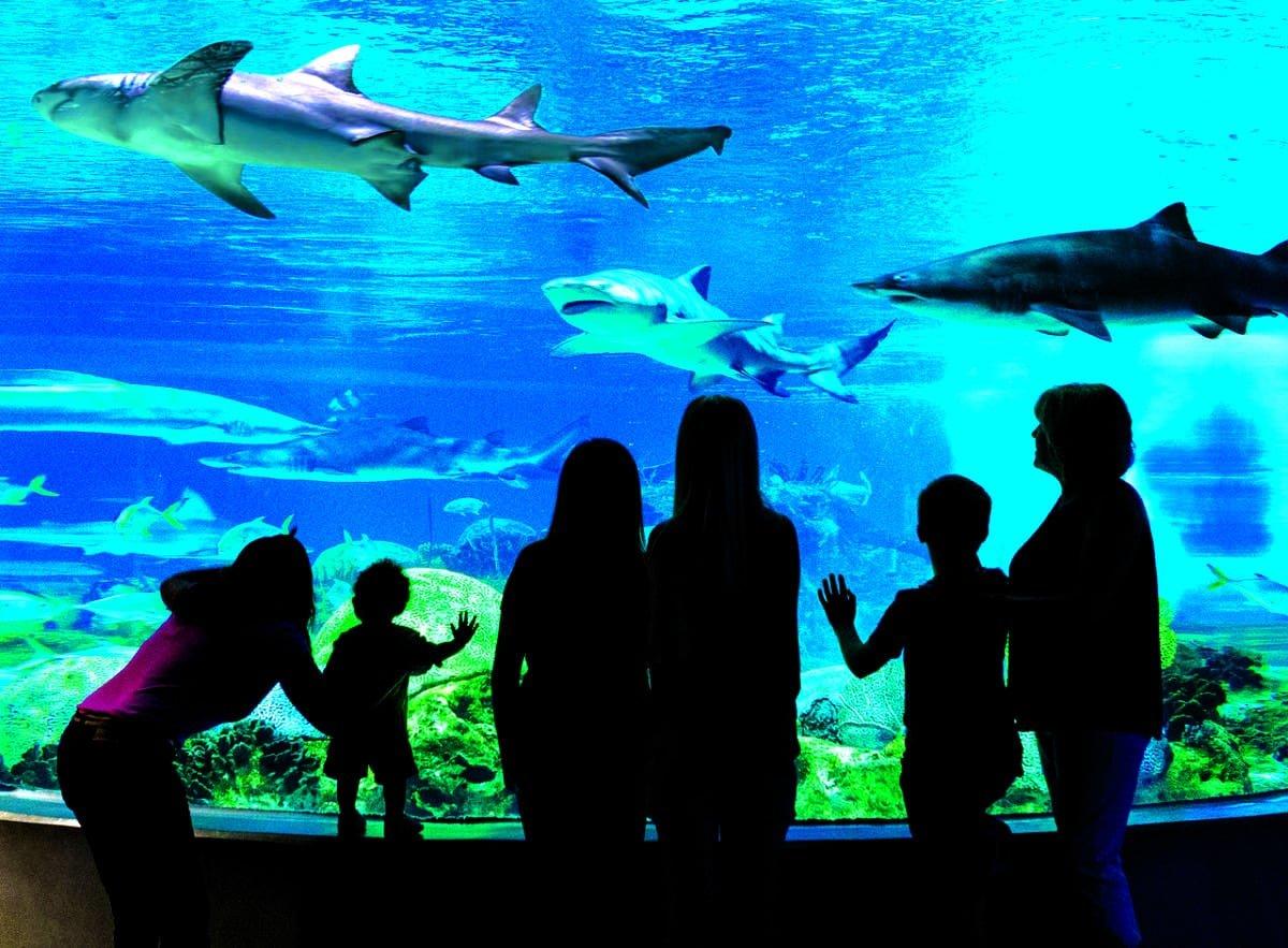 OdySea Aquarium in Scottsdale with children