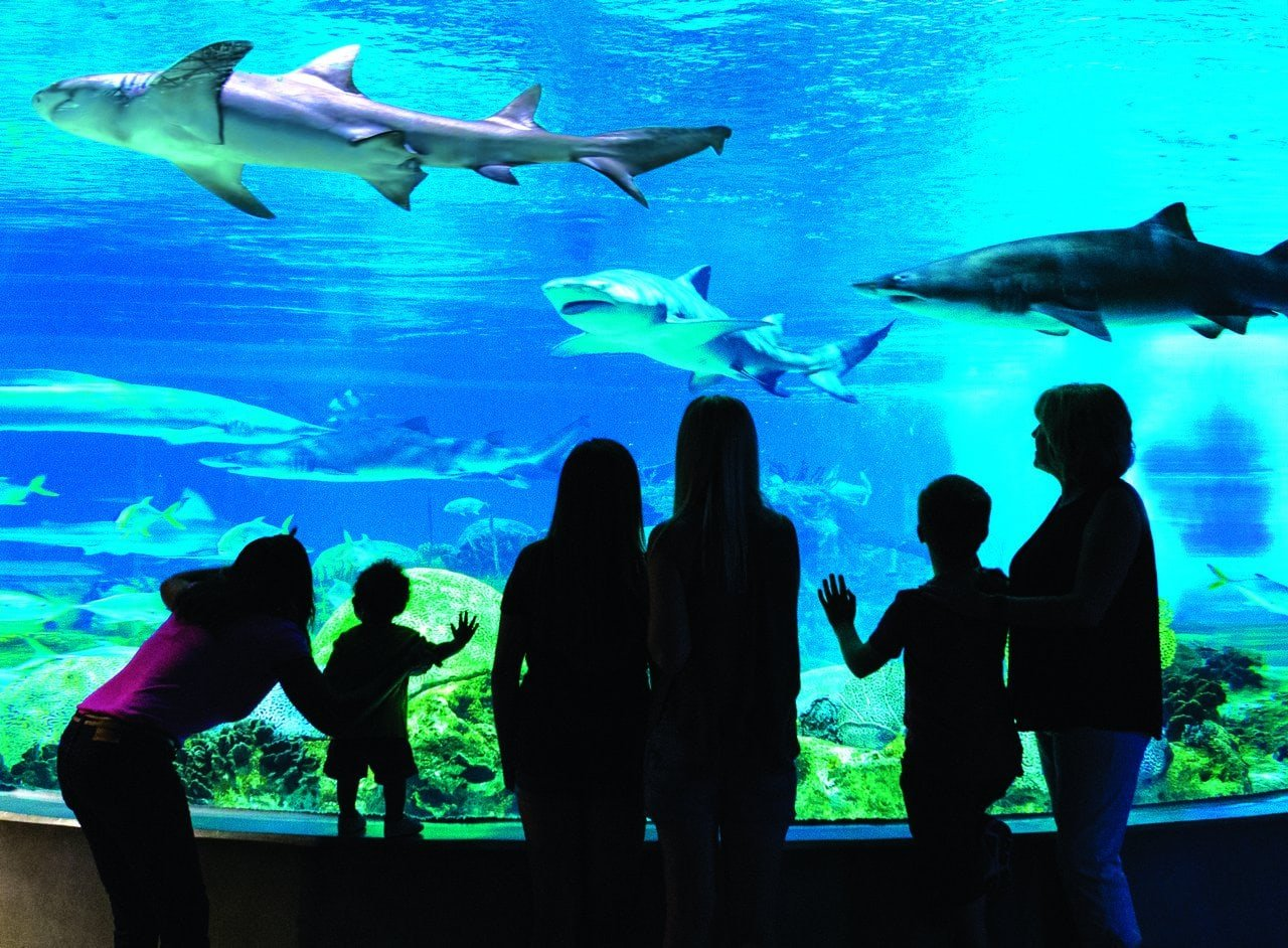 OdySea Aquarium in Scottsdale with children