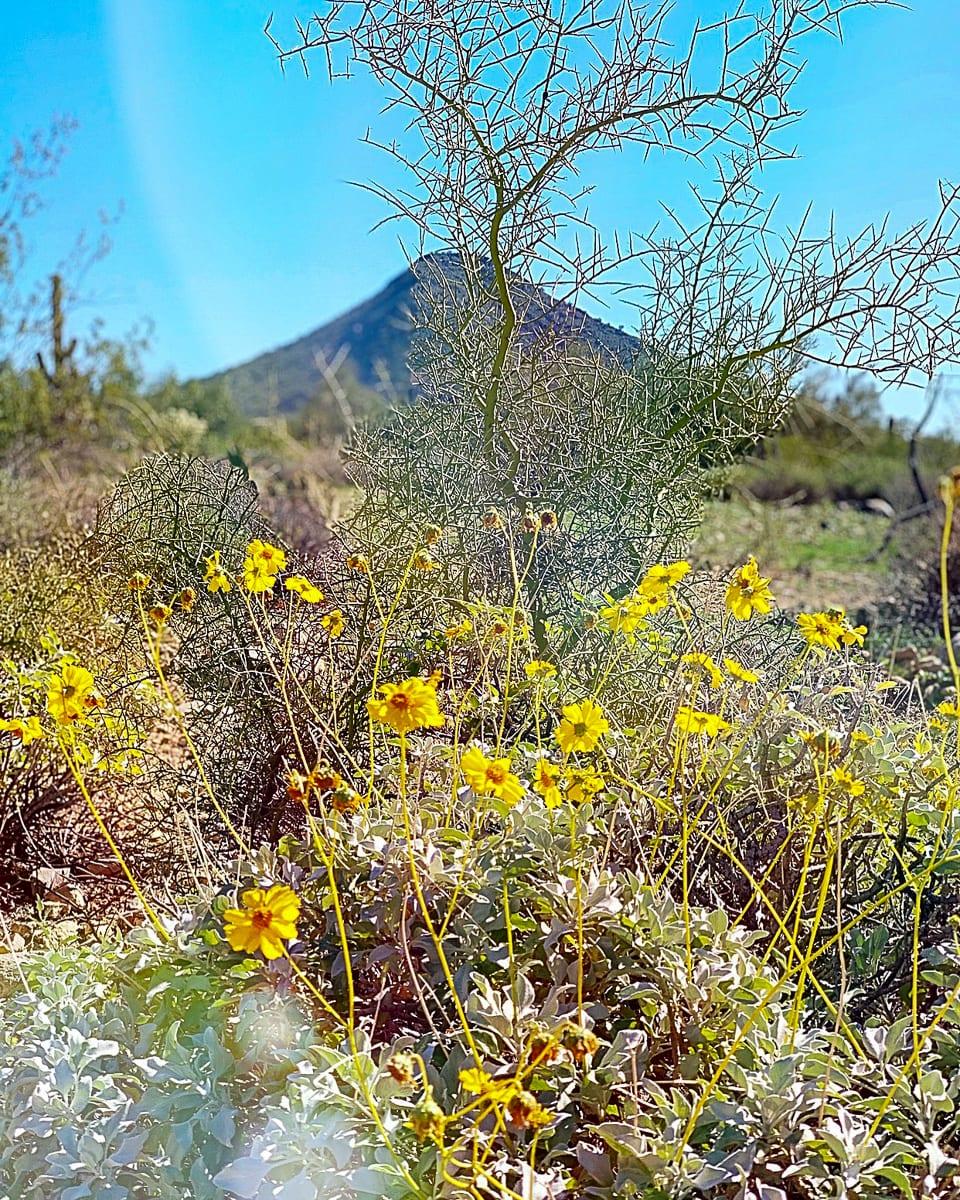 Hiking in Scottsdale in spring