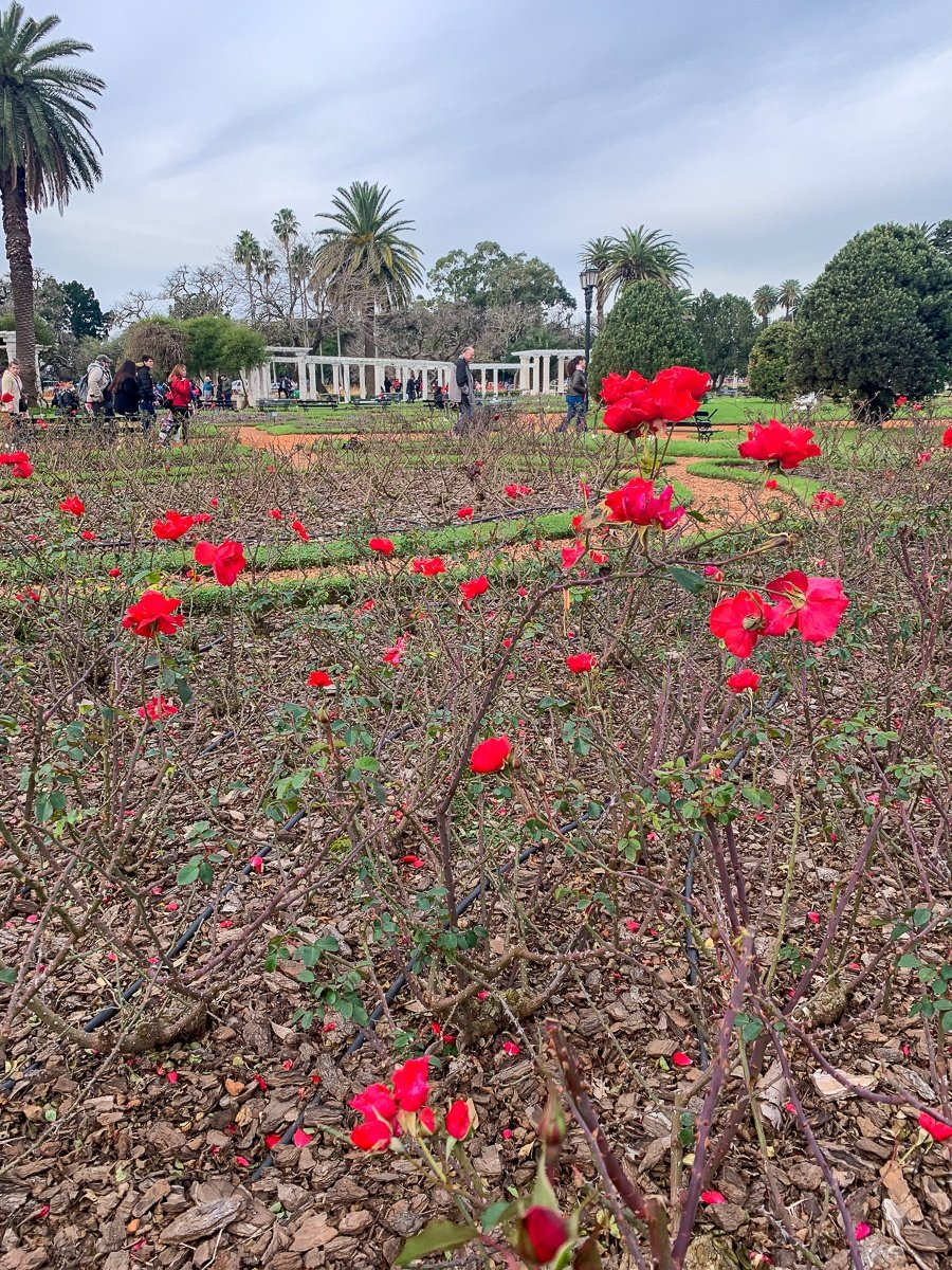 Rose Garden in winter at Parque Tres de Febrero