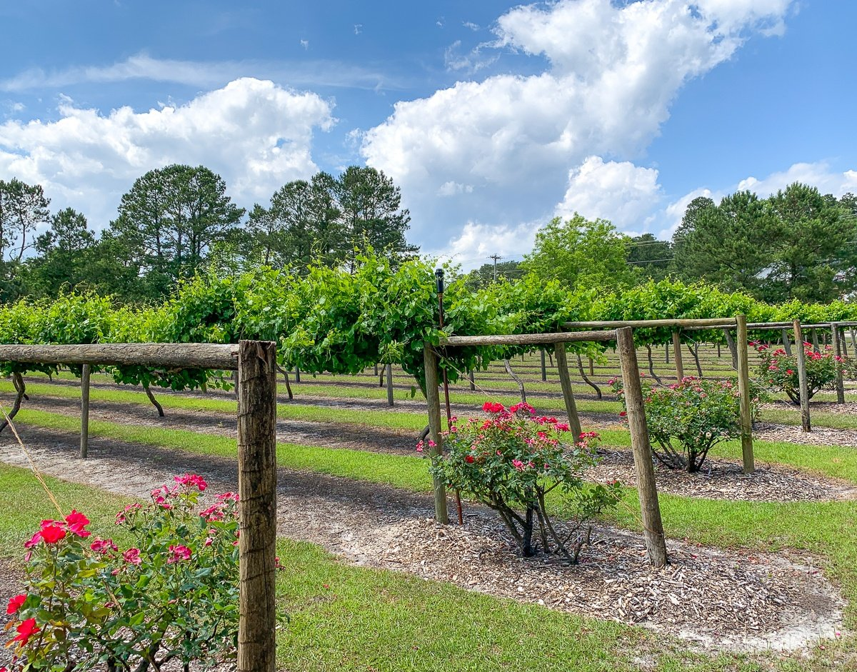 La Belle Amie Winery near Myrtle Beach for adults