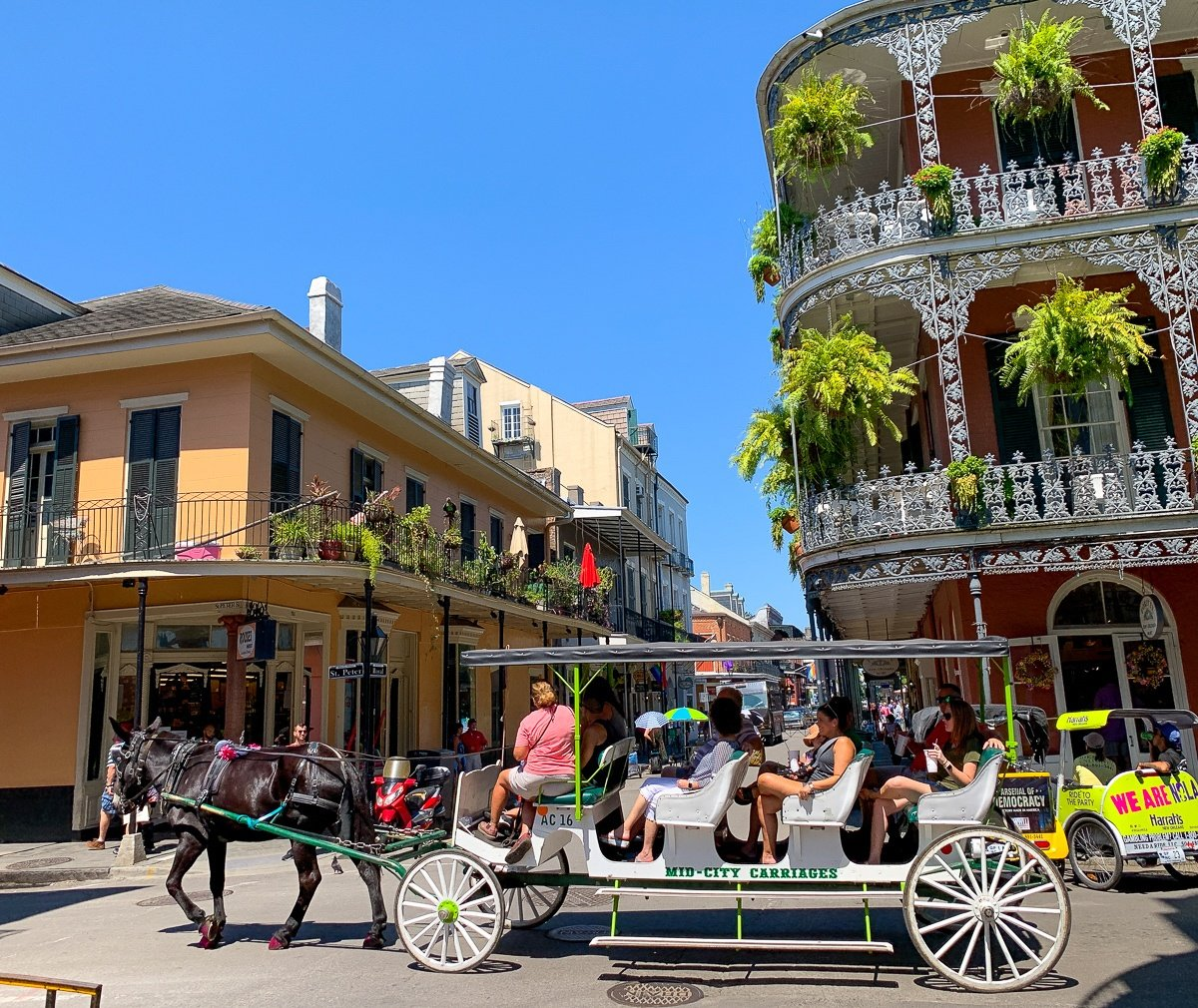 Mule-drawn carriage ride in the French Quarter of New Orleans with kids