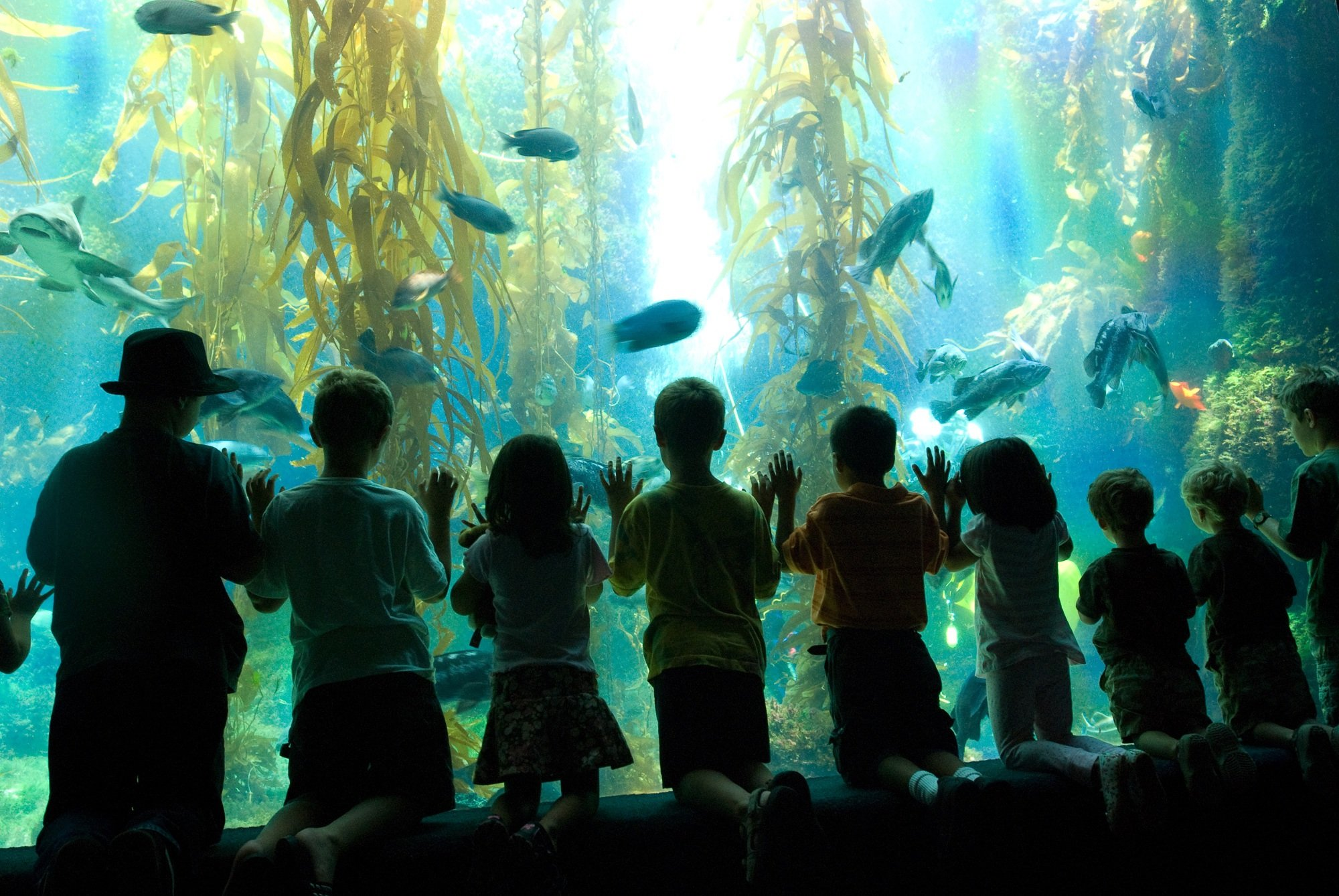 Scripps Birch Aquarium in San Diego with kids