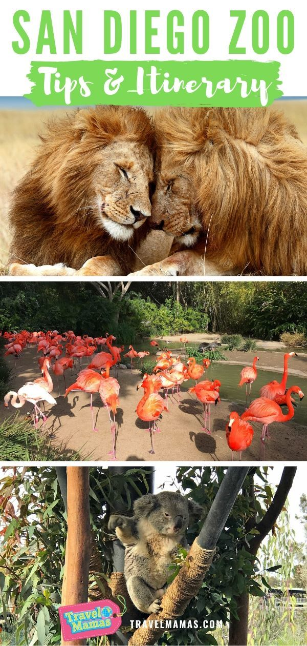 San Diego Zoo Tips and Itinerary