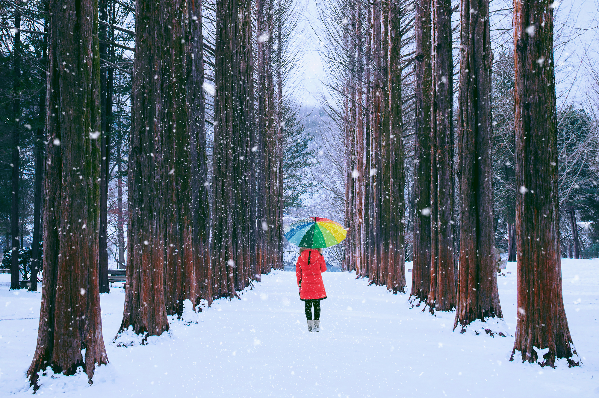 A solo walk in the snow away from the holiday hubbub