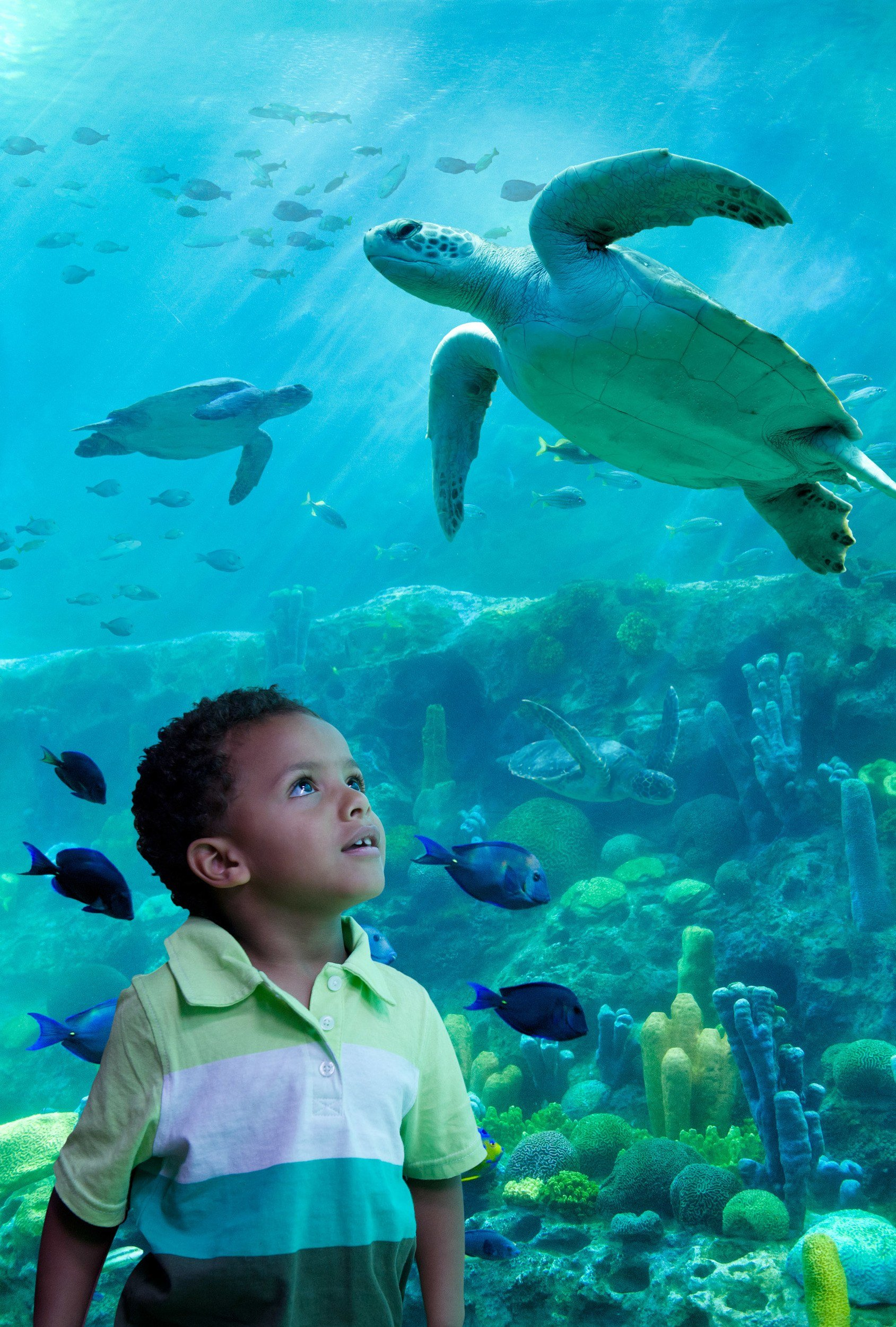 Young child at SeaWorld Orlando