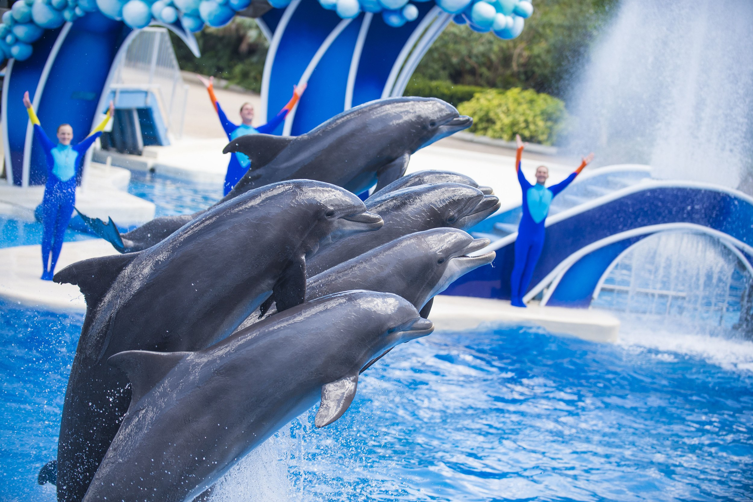 Dolphin Days animal show at SeaWorld Orlando