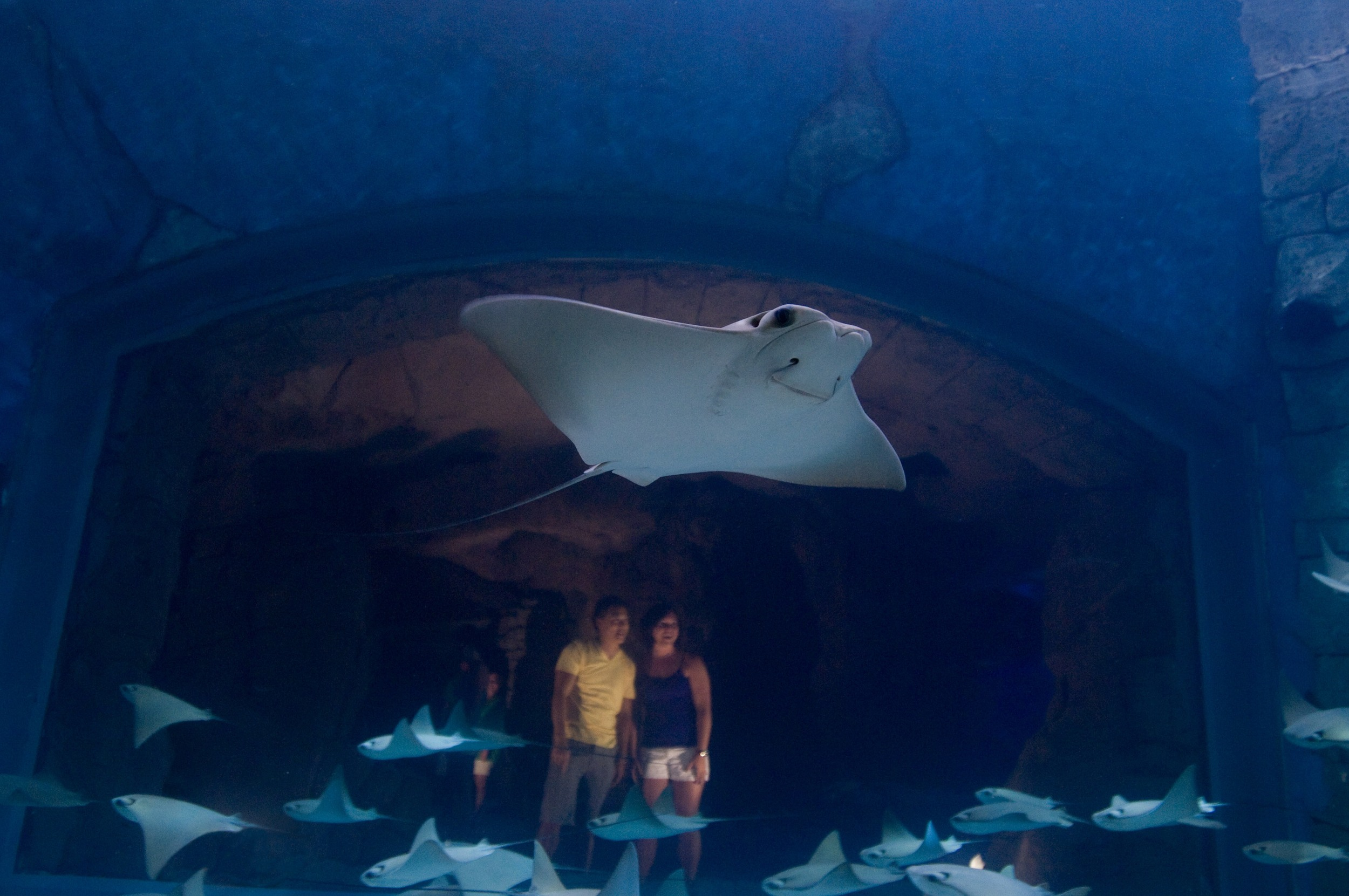 Rays at other ocean creatures at Manta