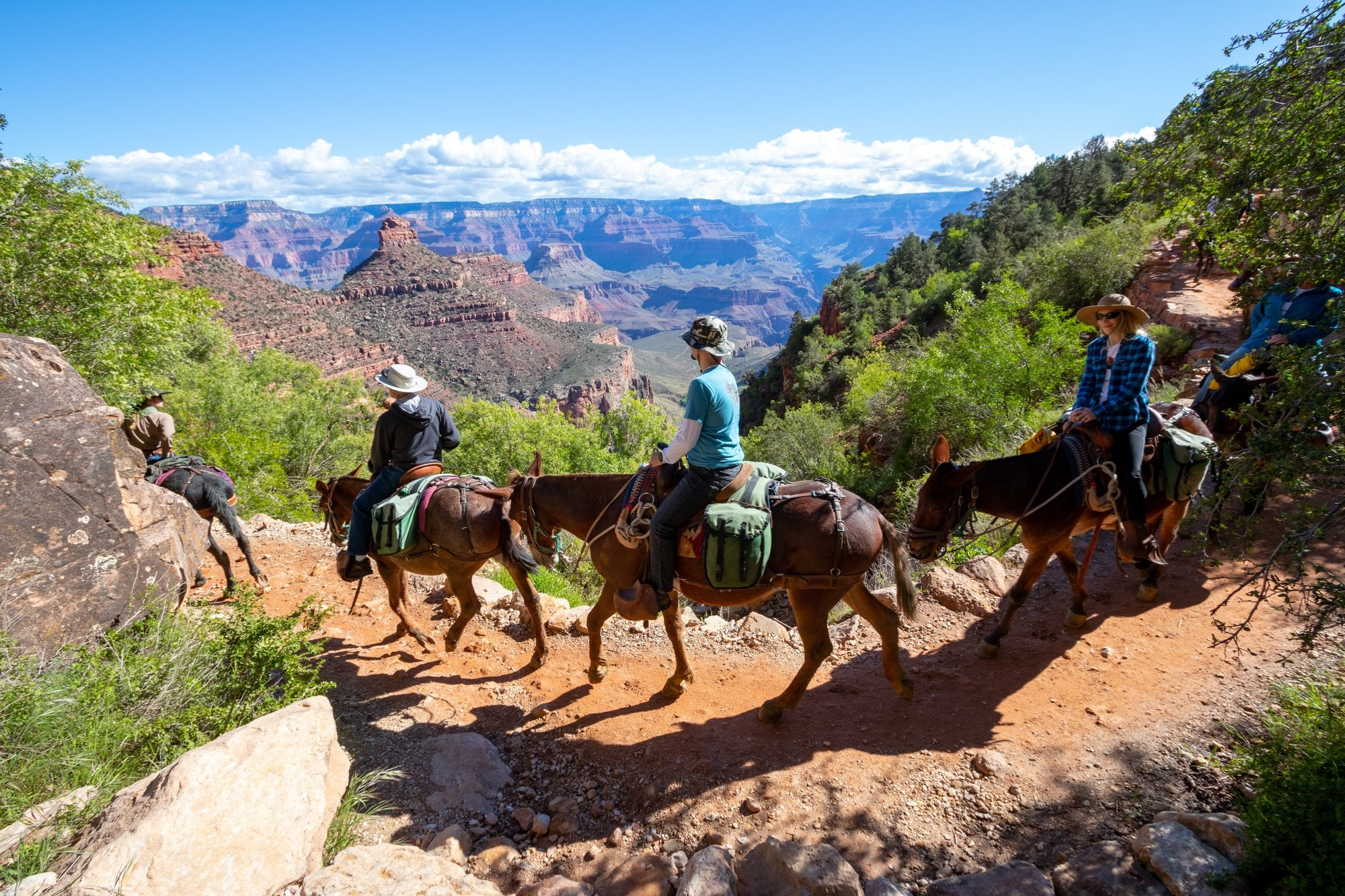 Mule train at the Grand Canyon