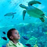 SeaWorld Orlando with Toddlers and Preschoolers