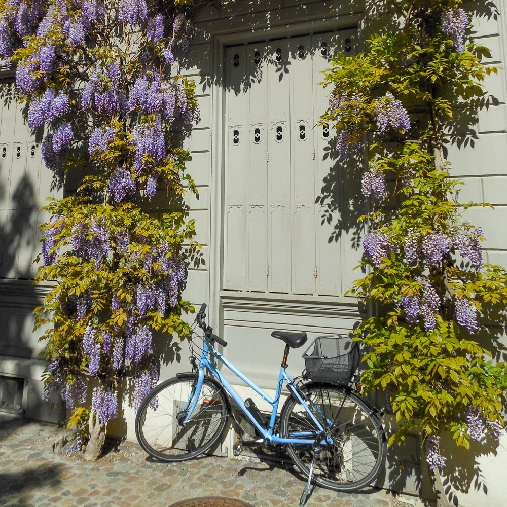 Bicycle and flowers in Basel, Swizerland